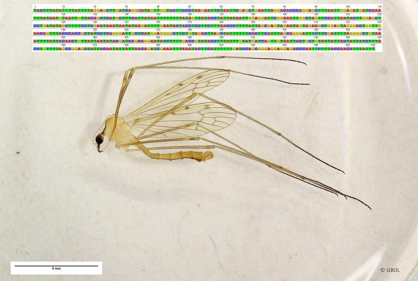Ein Insekt liegt auf einem weißen Hintergrund. Darüber sieht man die Buchstaben des DNA-Codes.