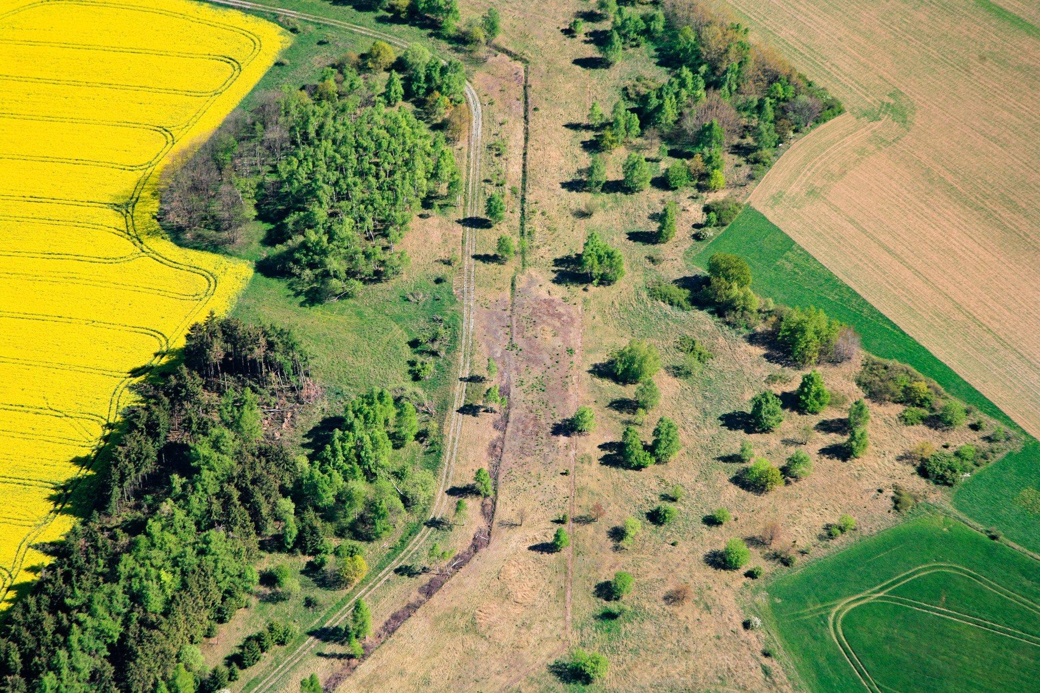 Offene Flächen zwischen einem leuchtend gelben Rapsfeld und einem Acker, auf dem erste grüne Pflänzchen sprießen. Das Grüne Band im Frühling aus der Luft