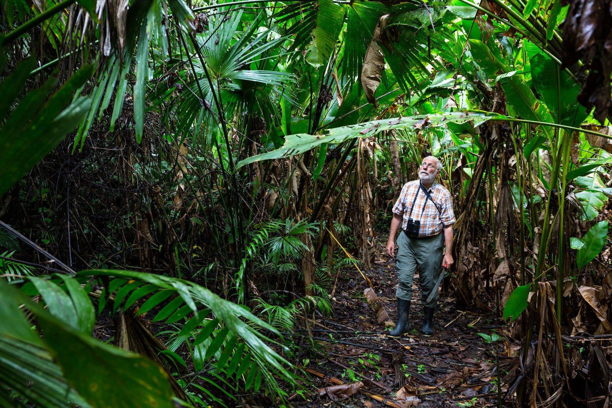 Manfred Siering in einem dicht bewachsenen tropischen Wald.