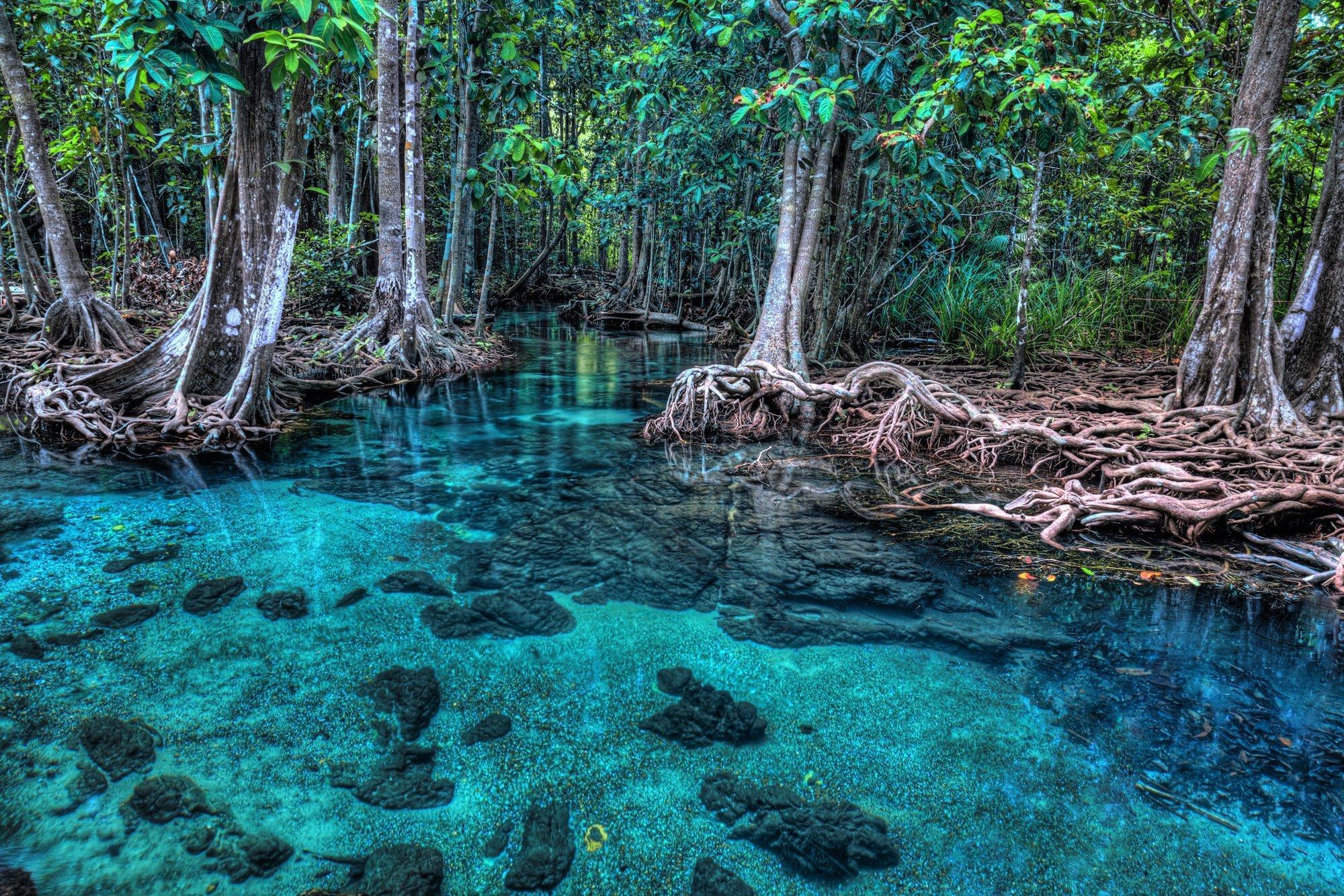 Das Bild zeigen einen Mangrovenwald, der direkt am Meer wächst. Das Wasser ist hellblau und durchsichtig, die Bäume haben geheimnisvoll verschlungene Stämme und Äste.