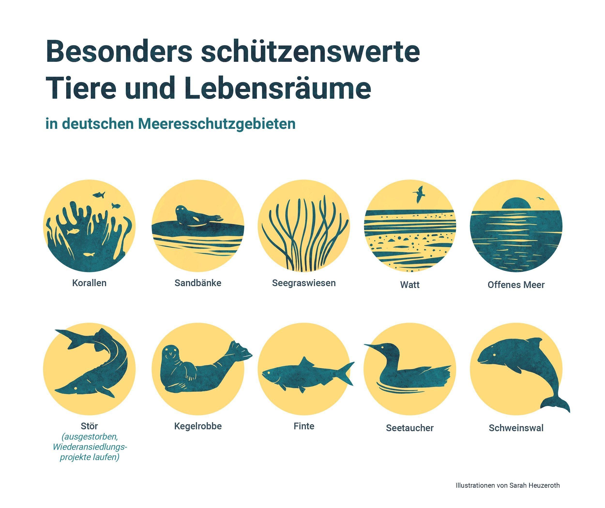 Graphik mit Icons für besonders wertvolle Lebensräume (Riffe, Sandbänke, offene See) und Arten (Kegelrobben, Stör, Schweinswal, Finte)