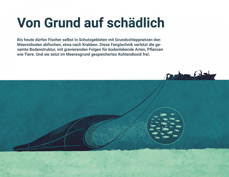 Die Grafik zeigt, wie Schleppnetze am Meeresgrund entlangrumpeln und Boden samt Bodenlebewesen schädigen