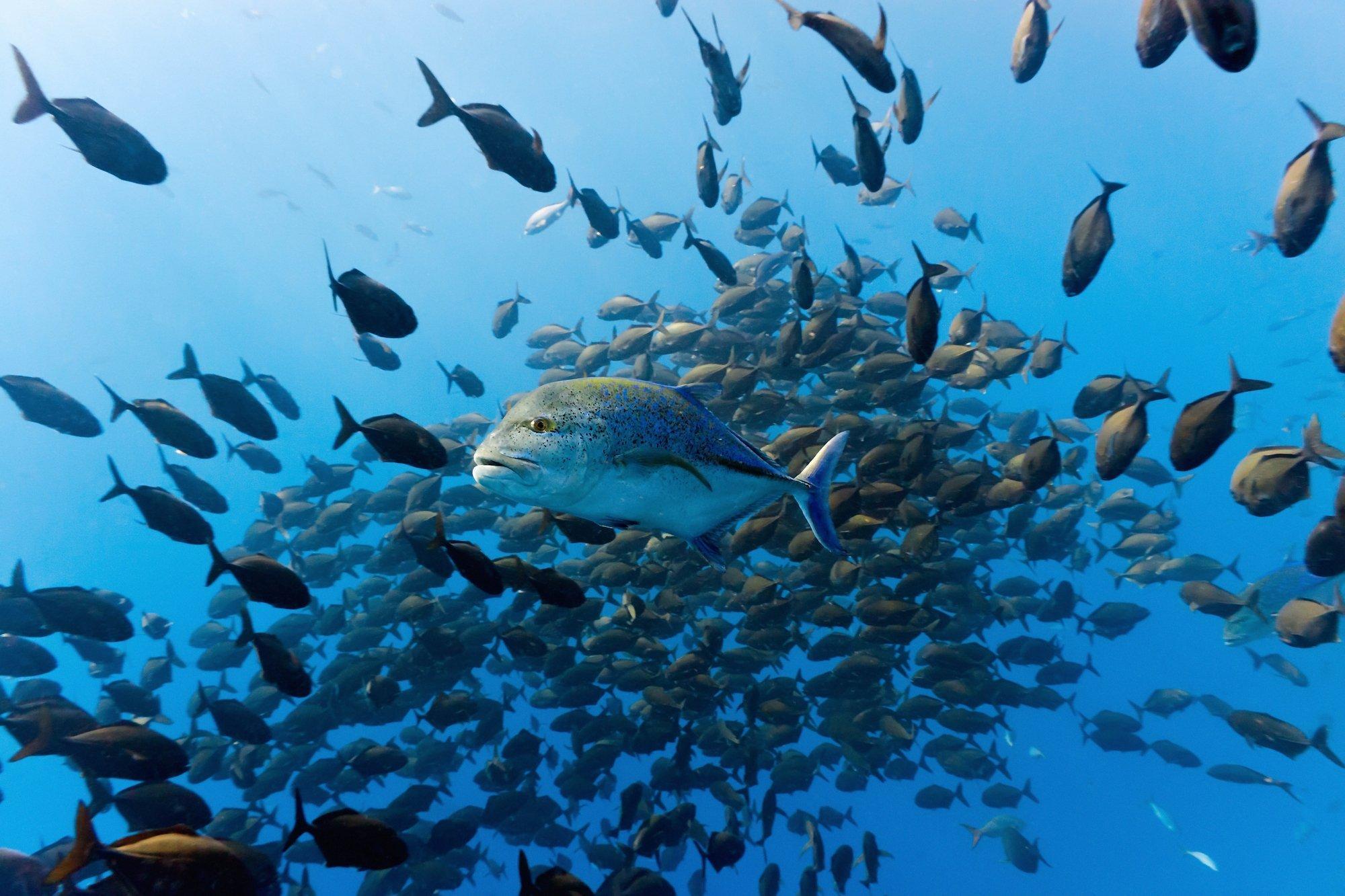 Das Bild zeigt Fischschwärme im Ozean