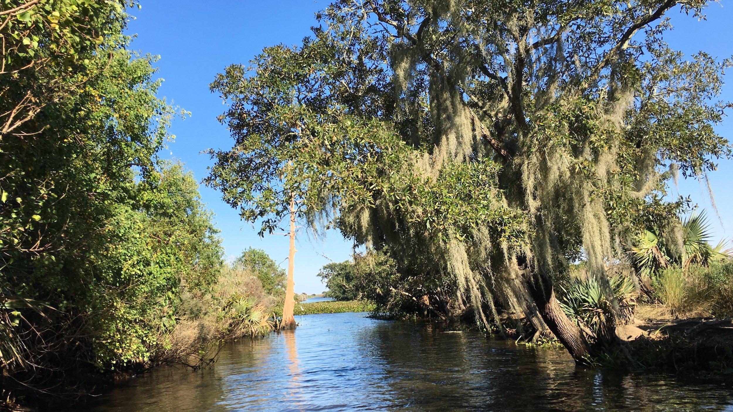 Das Bild stellt einen Abschnitt des Mississippi-Flusses dar. Im Zentrum Wasser, rechts und links Galeriewälder, die einen tristen Eindruck machen. Das Bild zeigt das Gebiet, in dem die Expeditionsteilnehmer nach Eiern von Alligatoren gesucht haben.