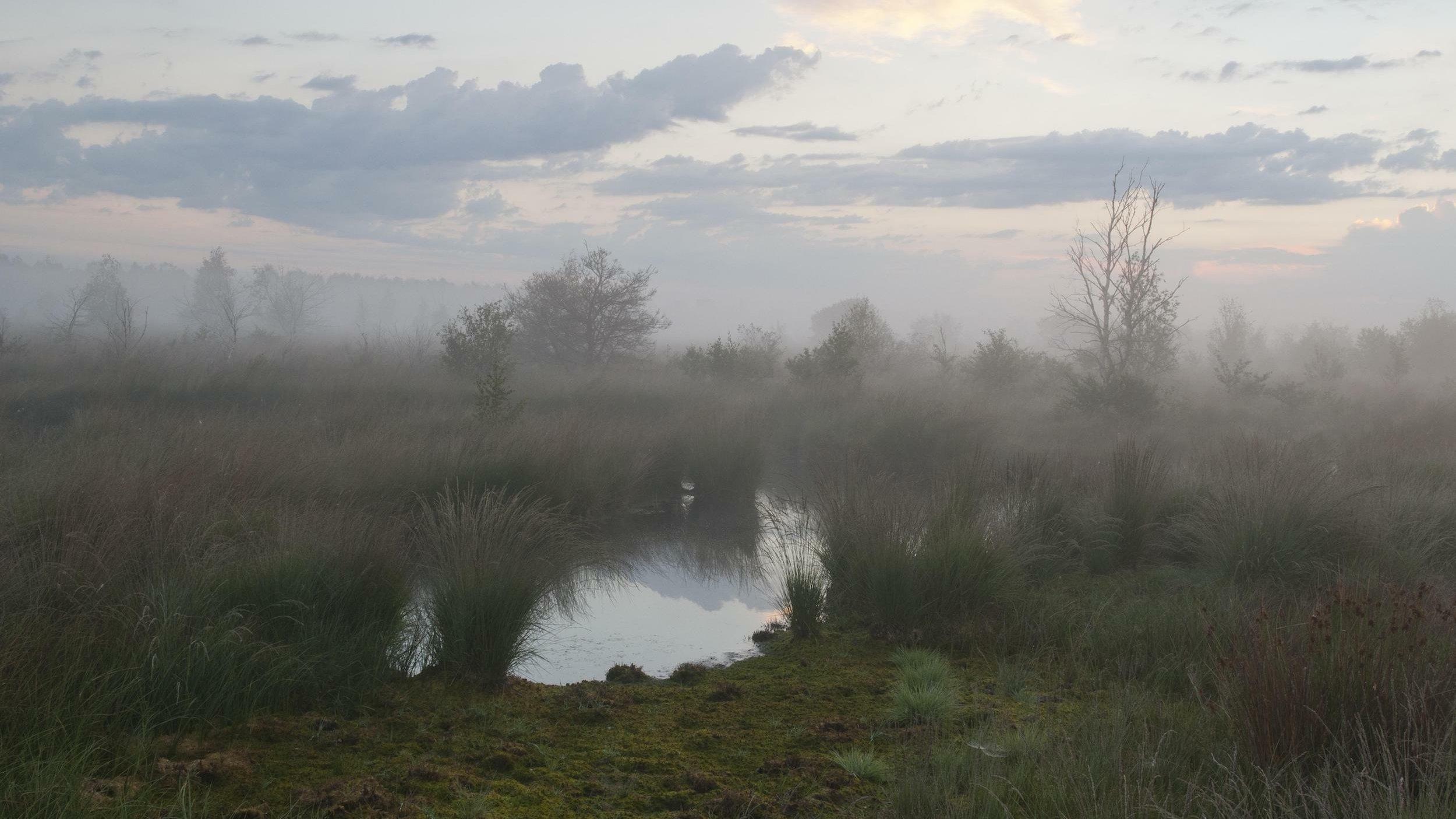 Ein Moortümpel in einer nebligen Landschaft