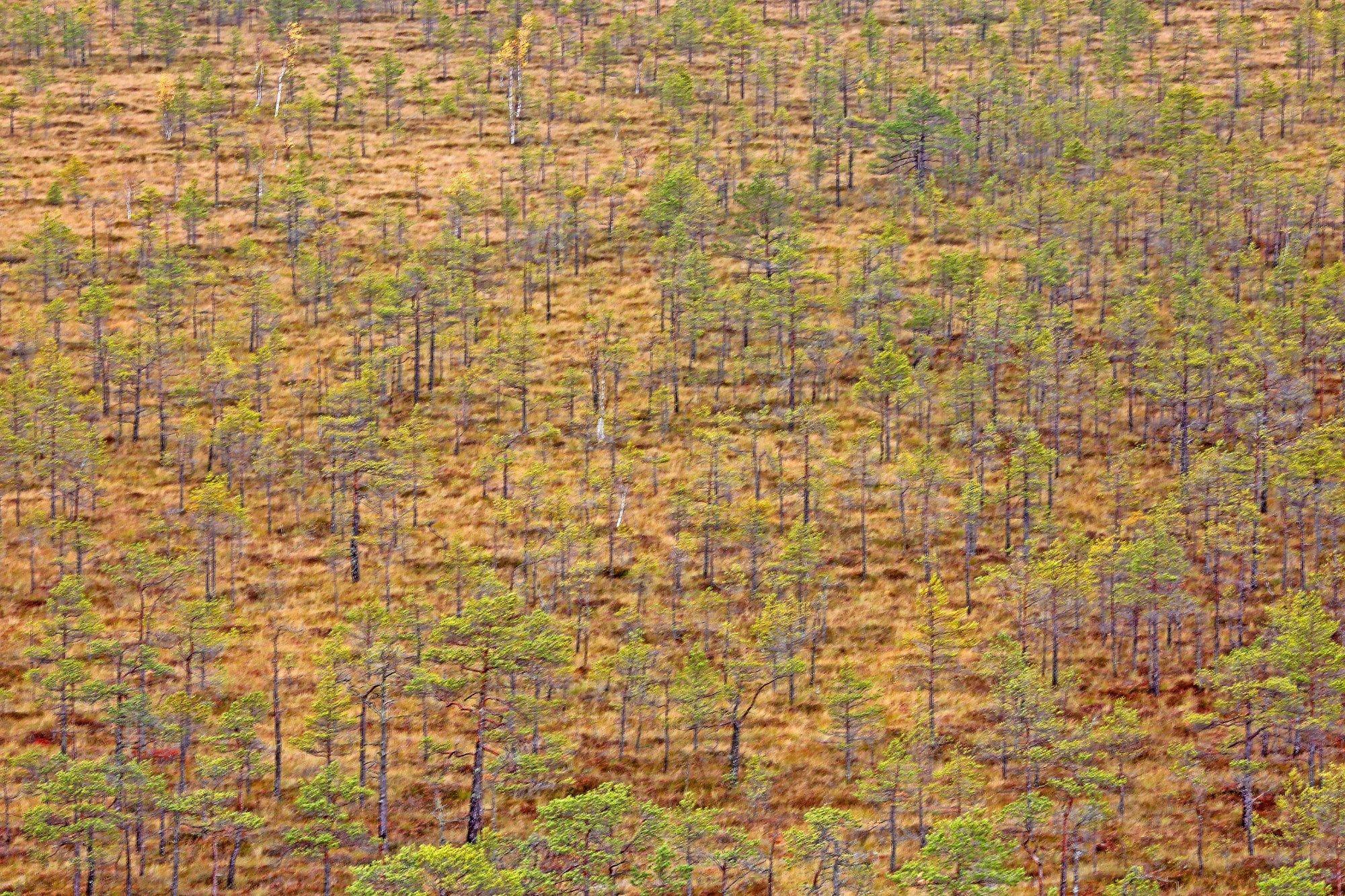 Ein Moor von oben fotografiert in abstrakter Langzeitbelichtung.