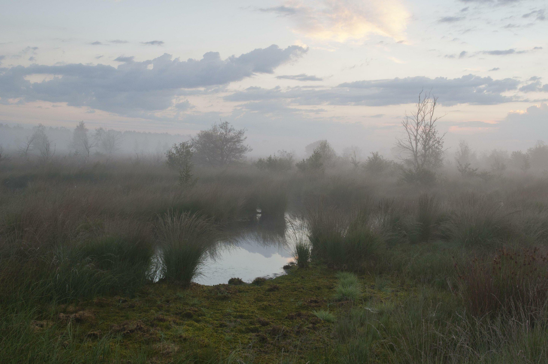 Moorelandschaft mit Nebel und Tümpel
