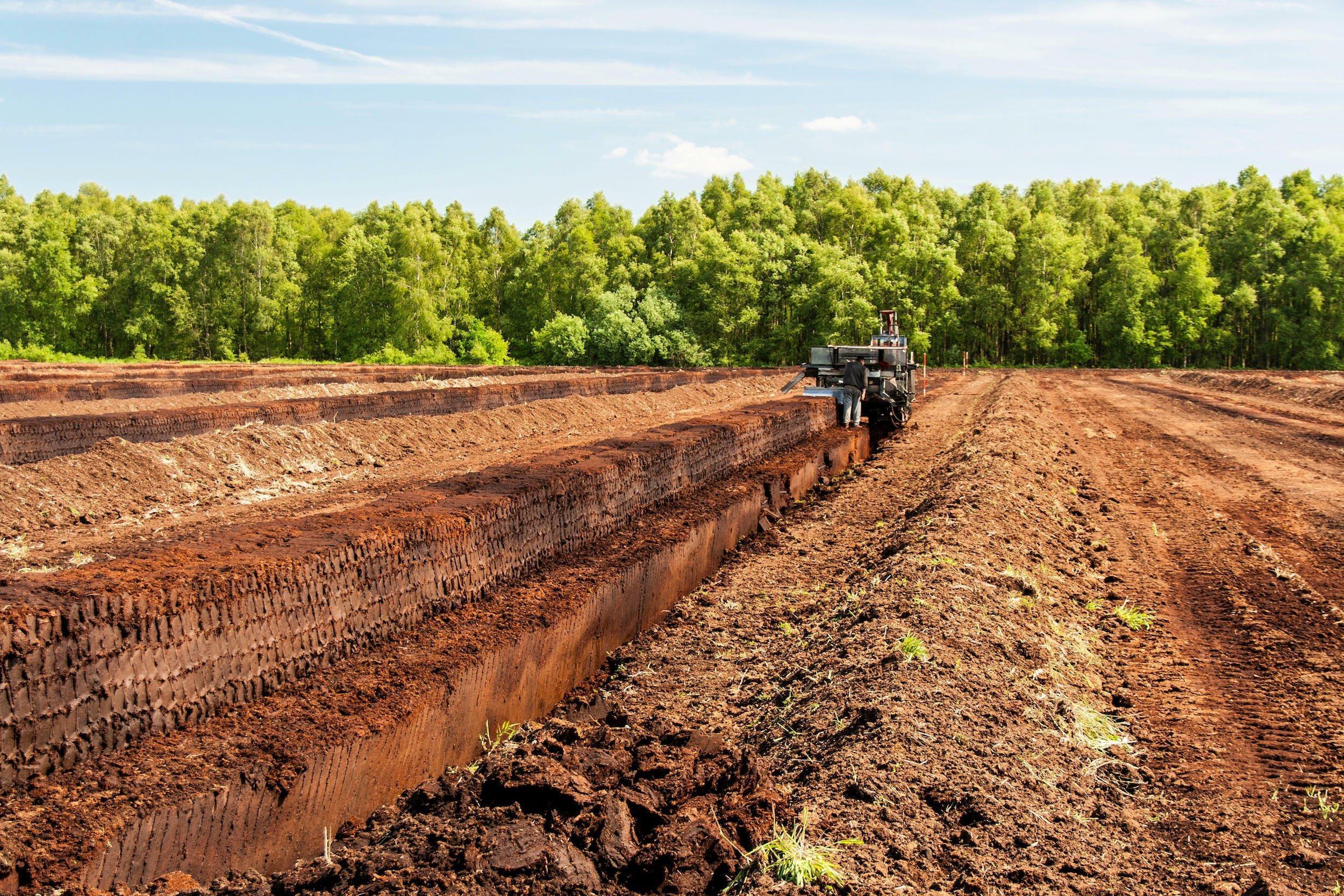 Das Bild zeigt eine abgetorfte Moorfläche in Niedersachsen, aus der eine große Maschine Torfblöcke herausschneidet.