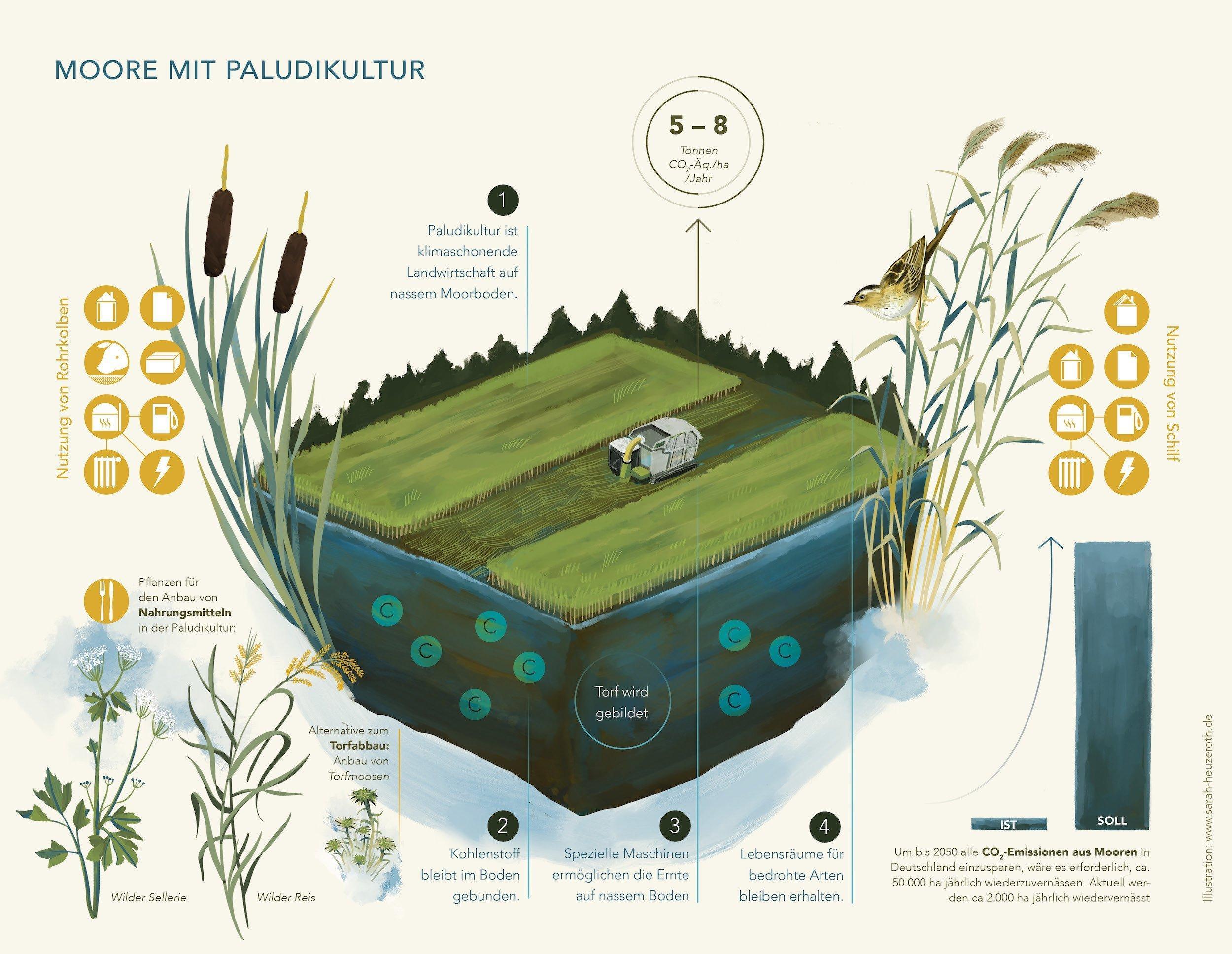 Die Grafik stellt dar, wie Moore auch in natürlichem Zustand genutzt werden können, ohne sie zu zerstören.