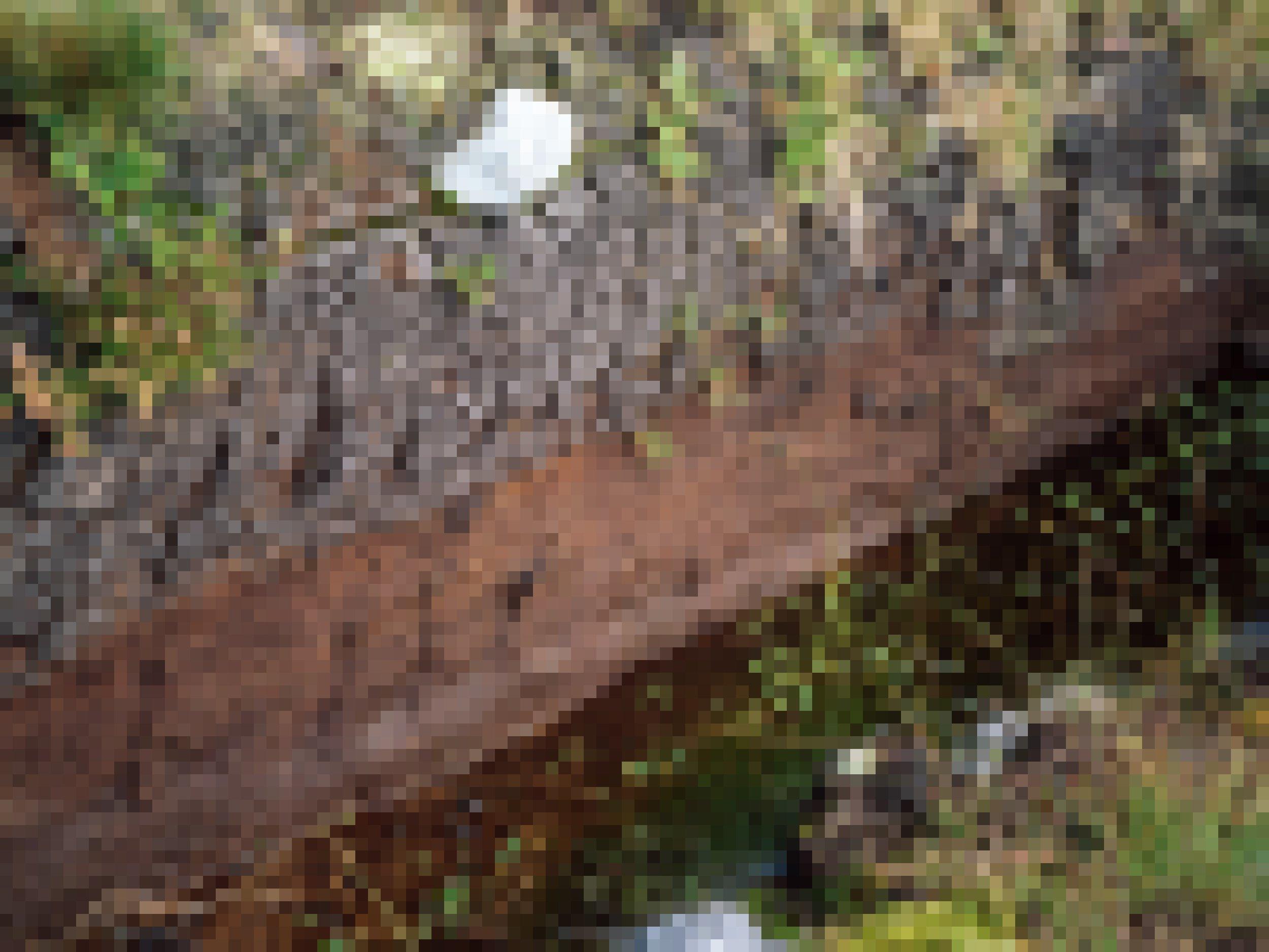 Foto der Kante eines Moorbodens. Daneben läuft Wasser ab.