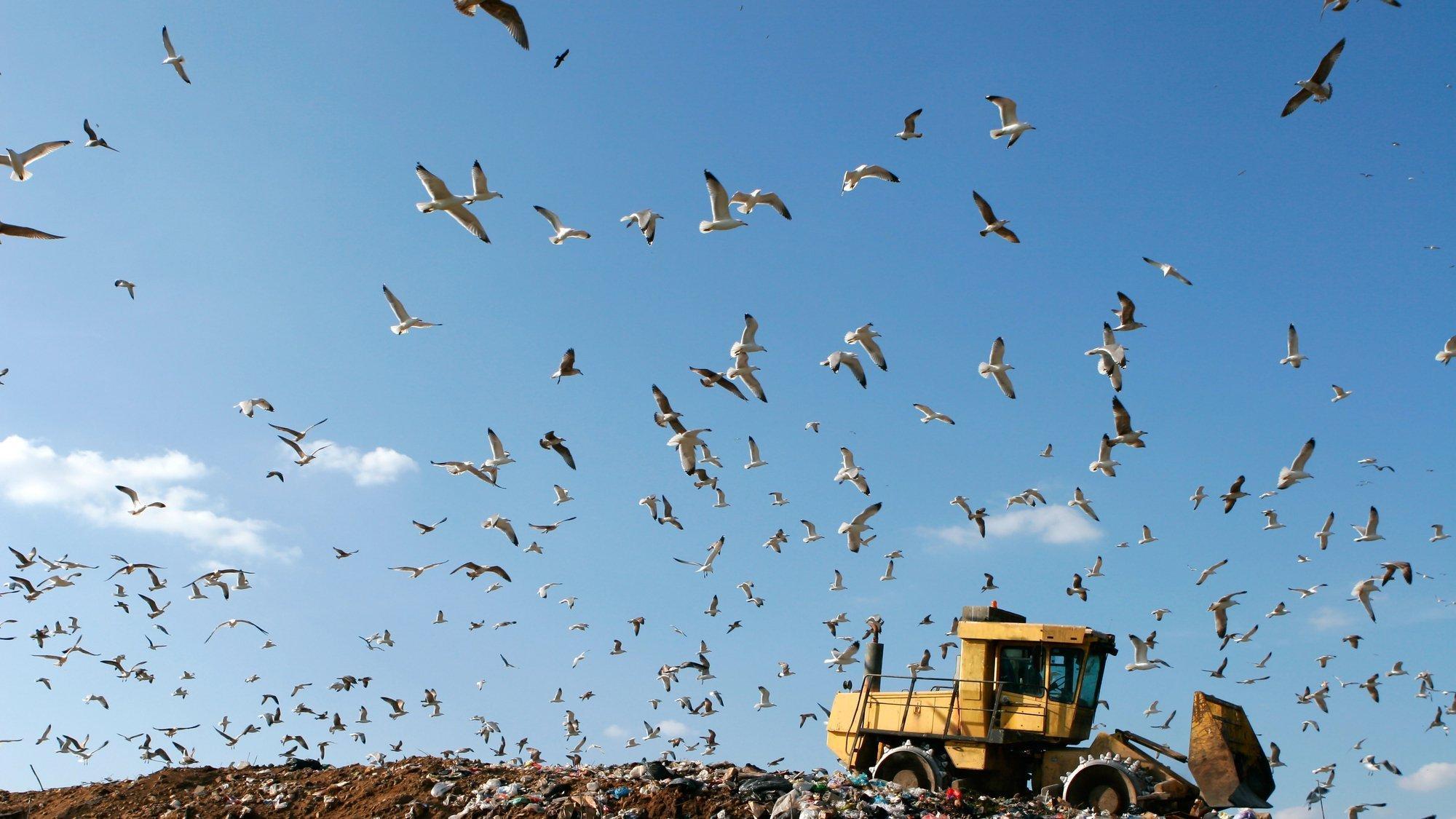 Möwen fliegen über einer Müllkippe, auf der ein Bulldozer steht.