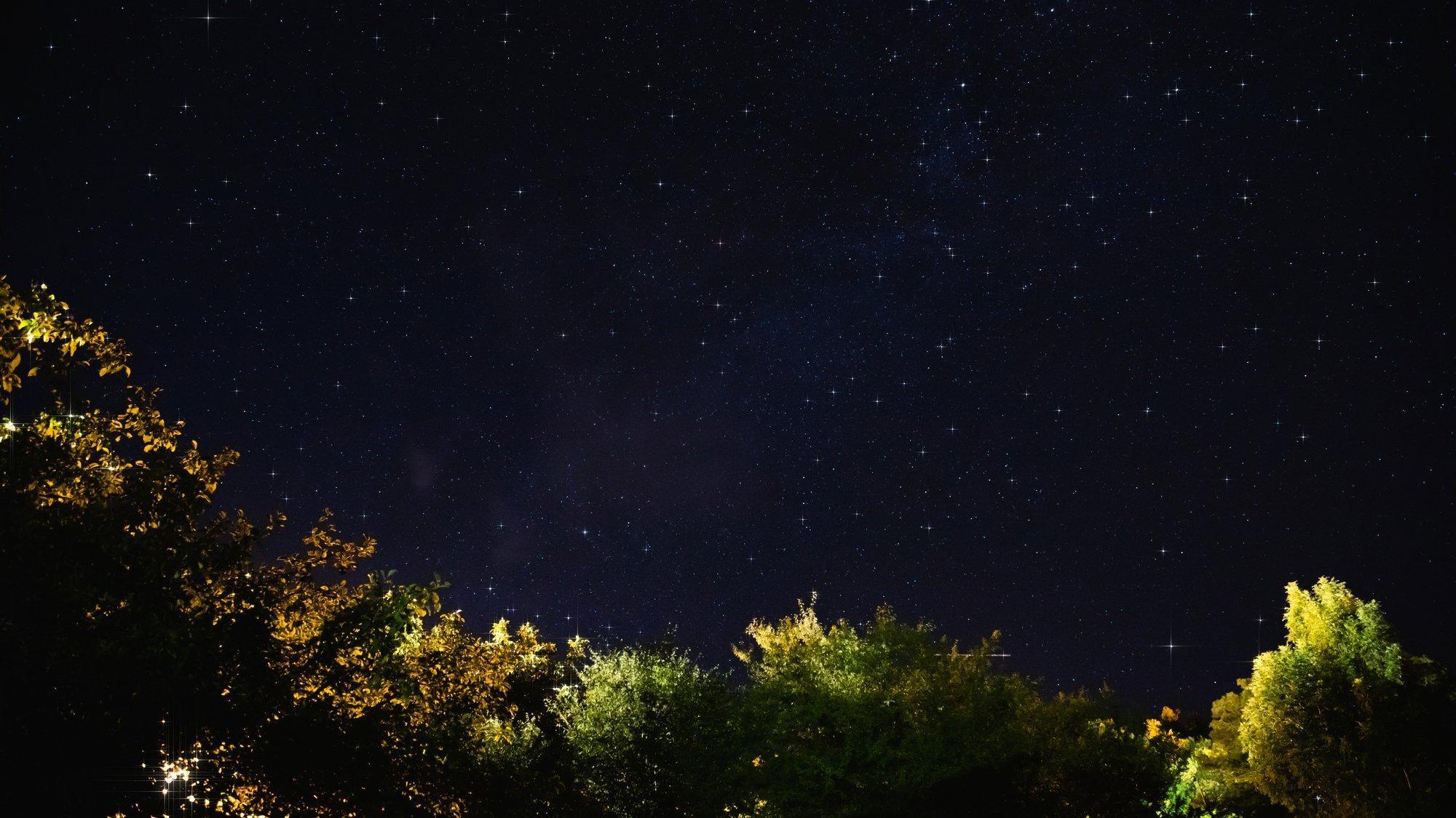 Eine Nachtszene mit Bäumen und Sternenhimmel, die Bäume werden angeleuchtet.