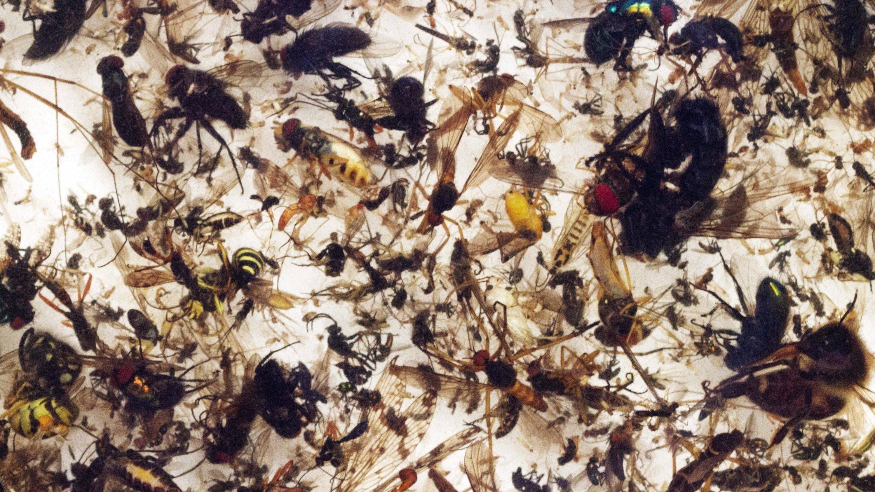 Ein Bild von sehr vielen verschiedenen Insekten.