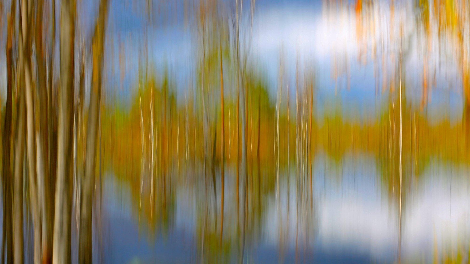 Ein Moor mit dichtem Birkenbewuchs, abstrakt fotografiert.