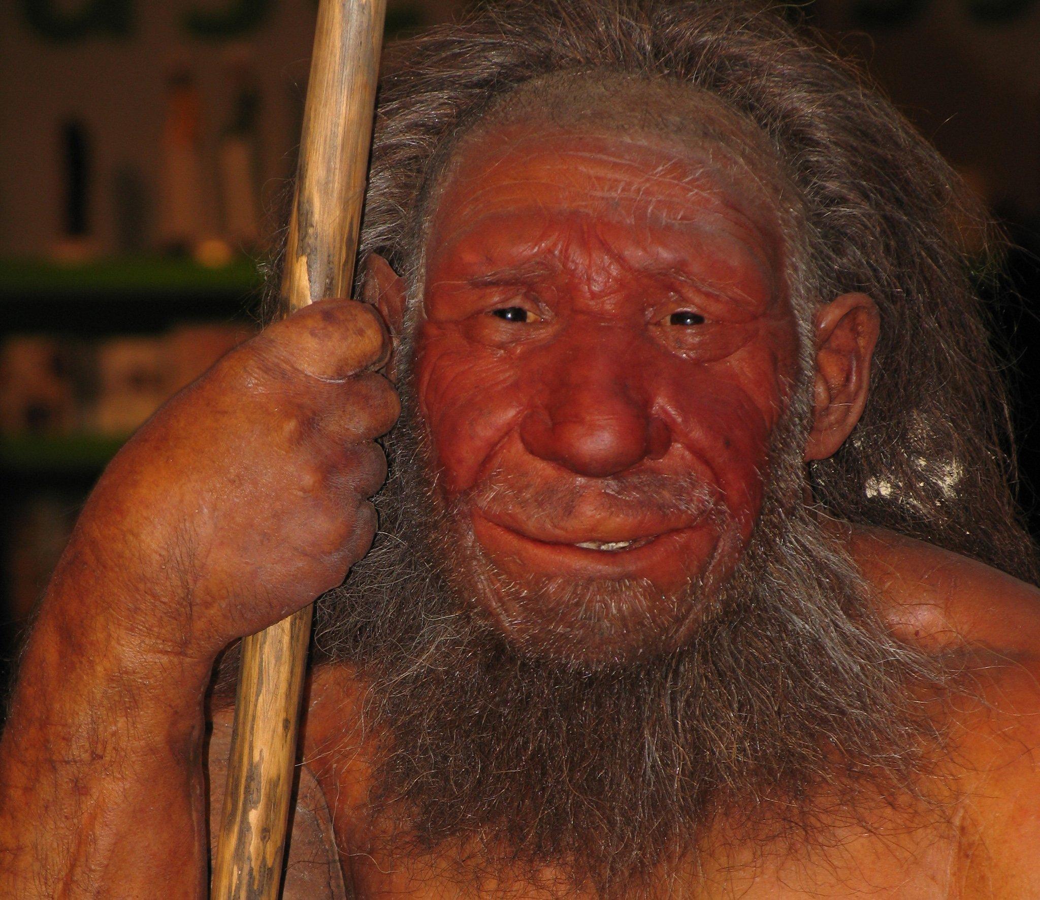 Das Foto zeigt einen muskelbepackten Mann mit gewaltiger Nase und breitem Mund, der sich auf seinen Wurfspeer stützt – es ist die Rekonstruktion eines Neandertalers am Neanderthal Museum in Mettmann. Forscher entdeckten jetzt Genbruchstücke von Neandertalern bei heutigen Menschen in Afrika.