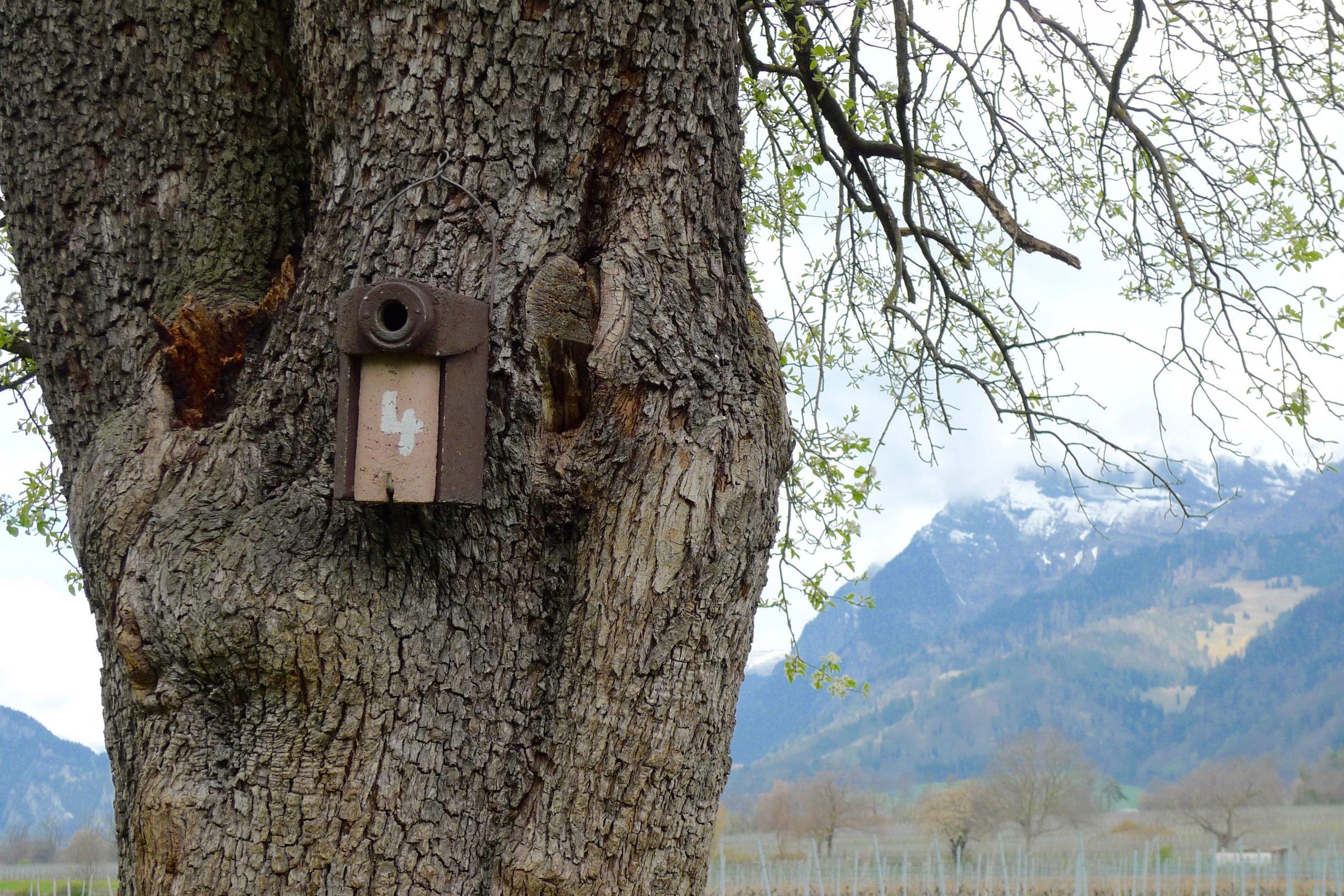 Nisthilfe für den Wendehals, an einem Baum angebracht.