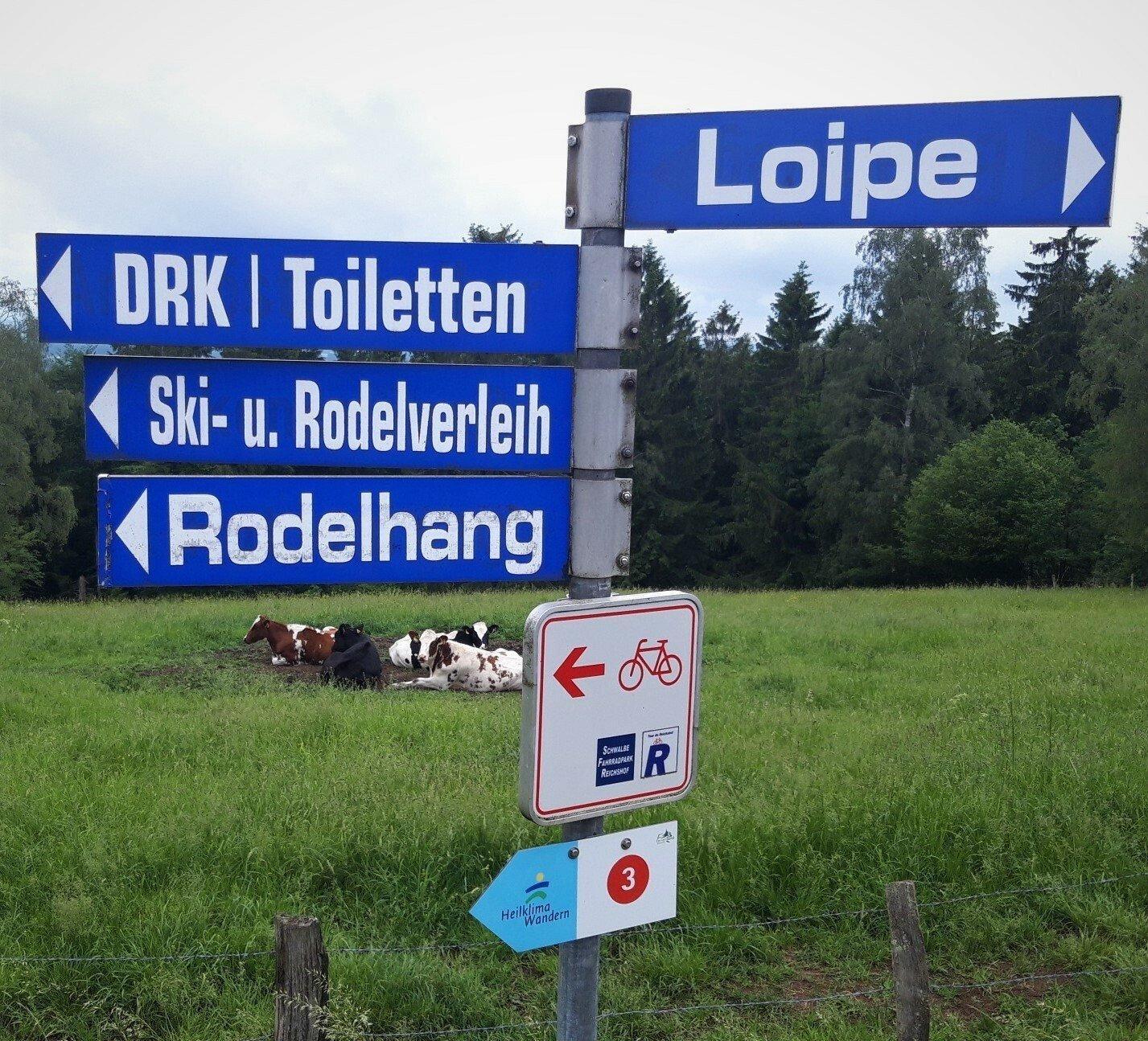 """Vor einer Weide mit Fleckvieh steht ein Schild mit den Hinweisen """"Loipe, Skiverleih, Rodelhang, Toiletten""""."""