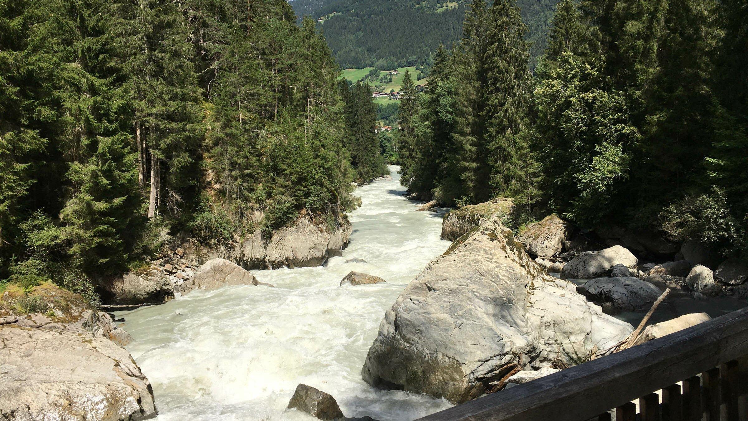 Weiß schäumender Gebirgsbach fließt zwischen großen Nadelbäumen, im Hintergrund ein grüner Berg.