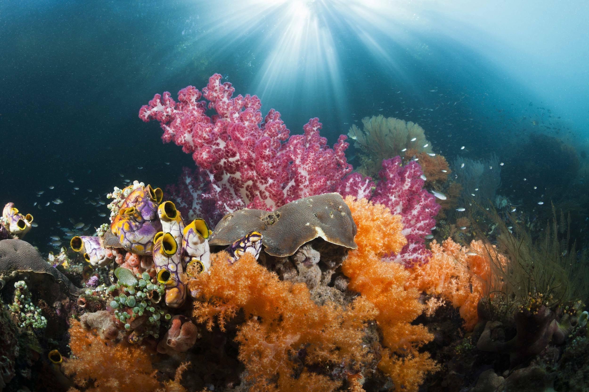 Das Bild zeigt ein Korallenriff vor Raja Ampat in Indonesien. Es ist wieder gesund und voller Fische, seit die Meereswelt dort geschützt wird