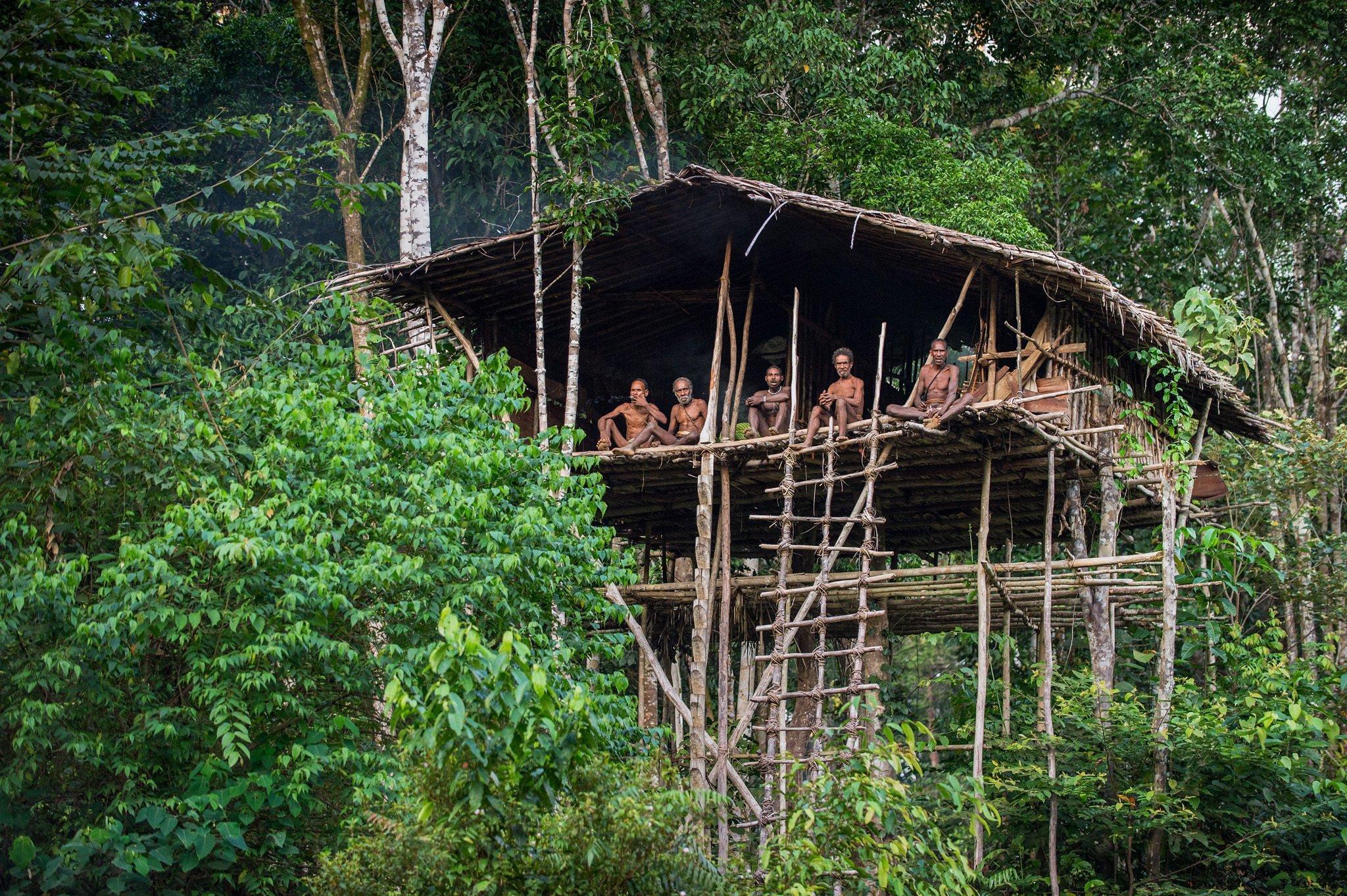Zu sehen ist ein auf hohen Stelzen errichtetes Baumhaus im Regenwald Neuguineas, auf dessen Plattform hoch oben Menschen sitzen und auf den Fotografen blicken. Es sind Angehörige des Volkes der Korowai.
