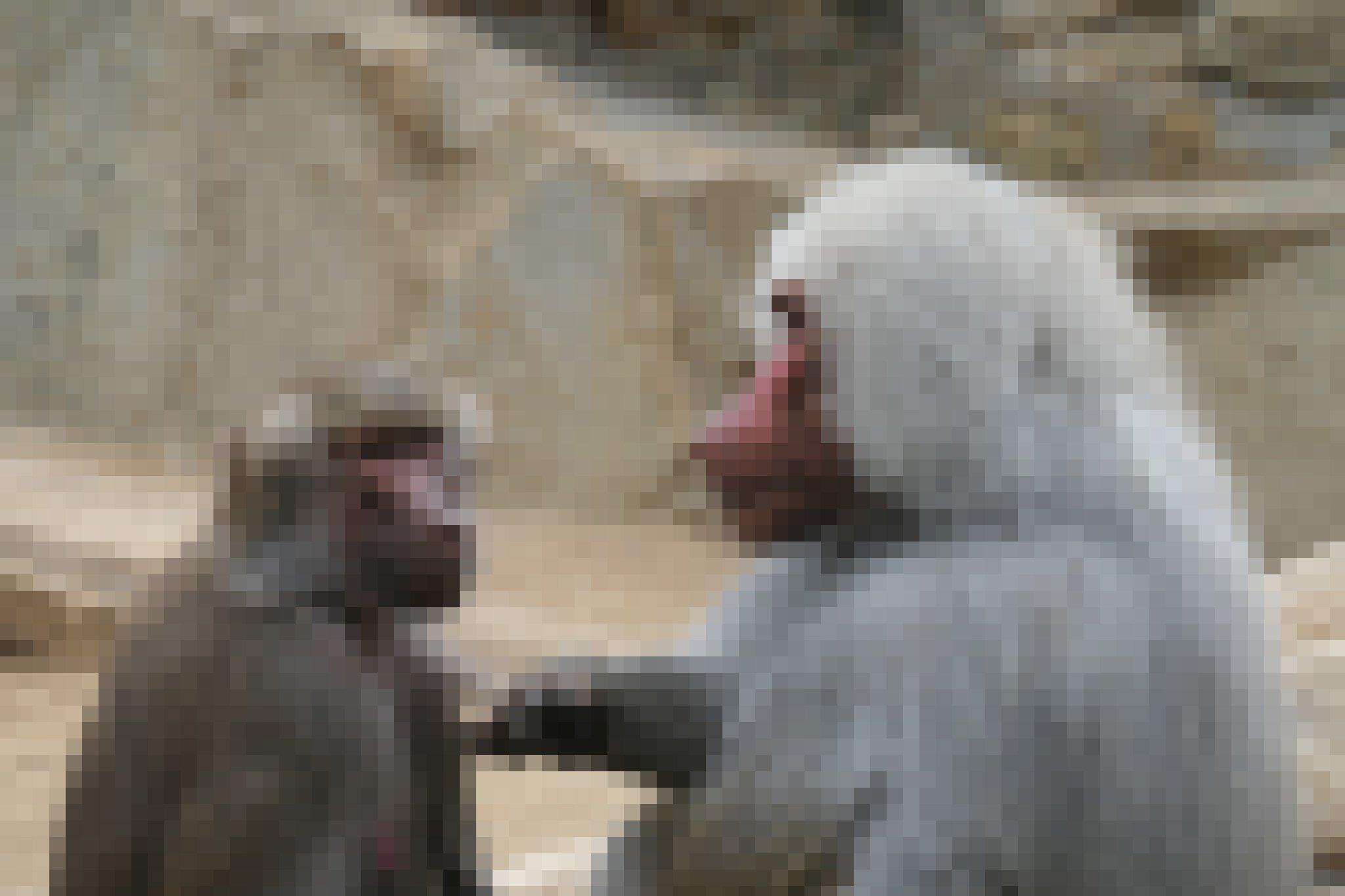 Auf dem Bild ist rechts der Oberkörper eines großen männlichen Pavians zu erkennen, der einem kleineren Weibchen auf der linken Seite auf die Brust tippt und sie dabei intensiv anblickt, während sie an ihm vorbeischaut. Was die beiden in diesem Moment empfinden mögen, lässt sich nur erahnen. Jedoch scheint die Szene eine innige Beziehung und eine gewisse Zuneigung anzudeuten.