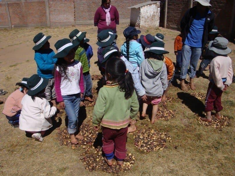 Rund zehn Grundschulkinder mit nackten Füßen und mit schwarzen Hüten zum Schutz gegen die Sonne, treten auf nackter Erde auf Kartoffeln. Bei ihnen steht ein erwachsener Mann, der Lehrer, ebenfalls mit nackten Füßen und  Sonnenhut.