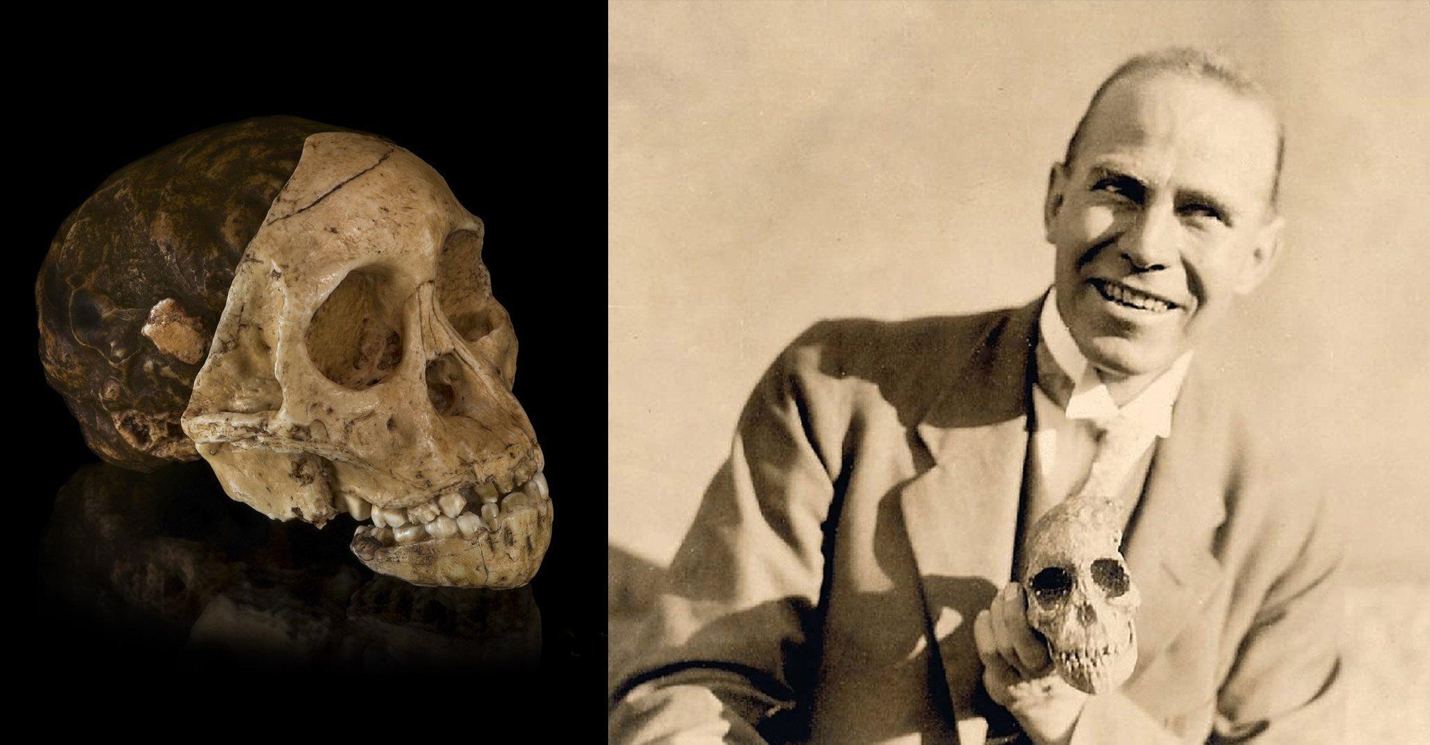 Hier sind zwei Fotos zu sehen: Links die knochenfarbene Versteinerung eines kindlich wirkenden, menschenähnlichen Gesichtsschädels, schräg von vorn und von der Seite, an dessen hinterem Teil sich Abschnitte eines versteinerten Gehirns erkennen lassen. Rechts das historische Foto eines jungen, lächelnden Mannes mit Jackett, der die links gezeigte Versteinerung in der linken Hand hält.