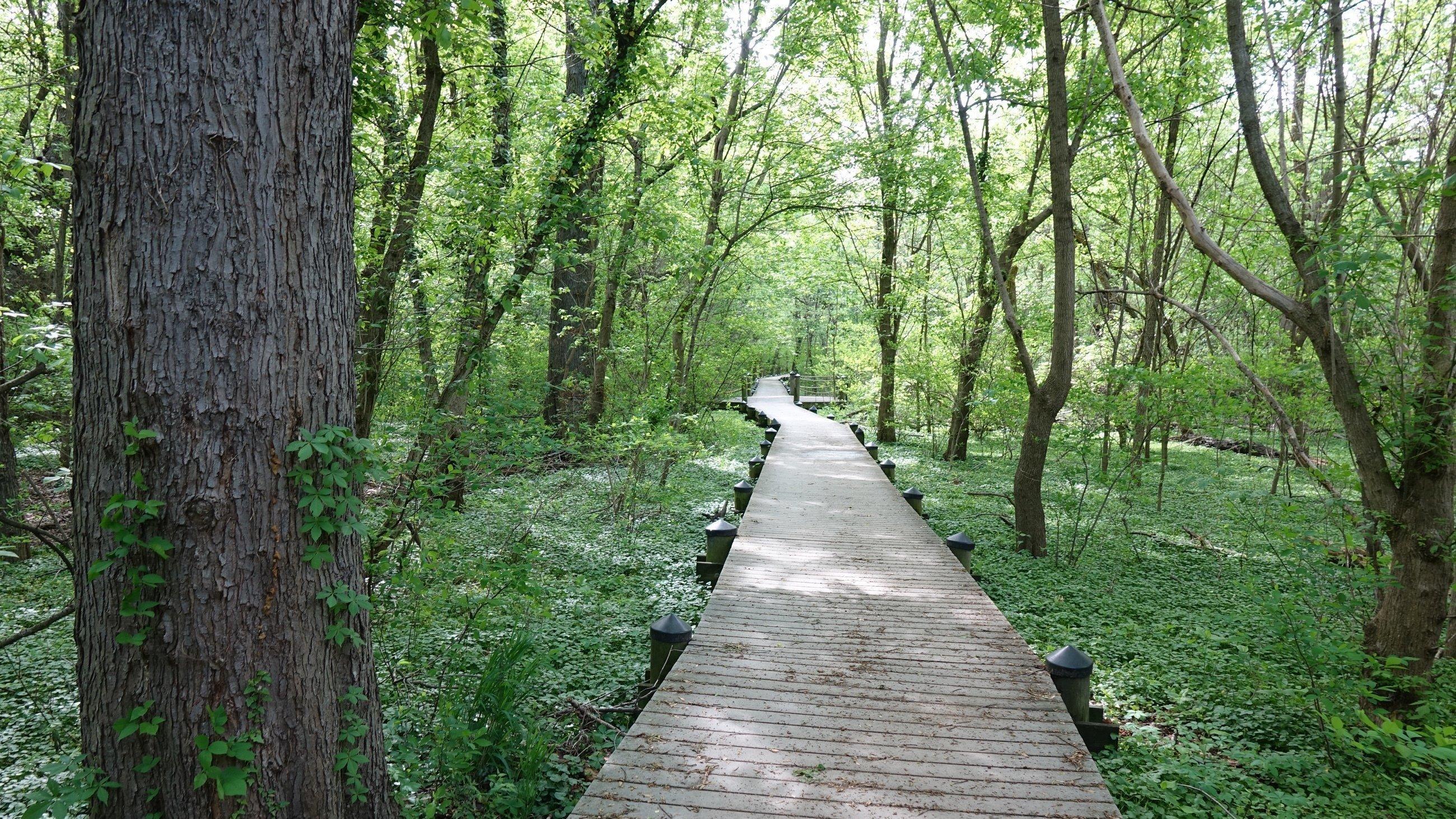 Ein Holzsteg führt durch dichte grüne Natur.