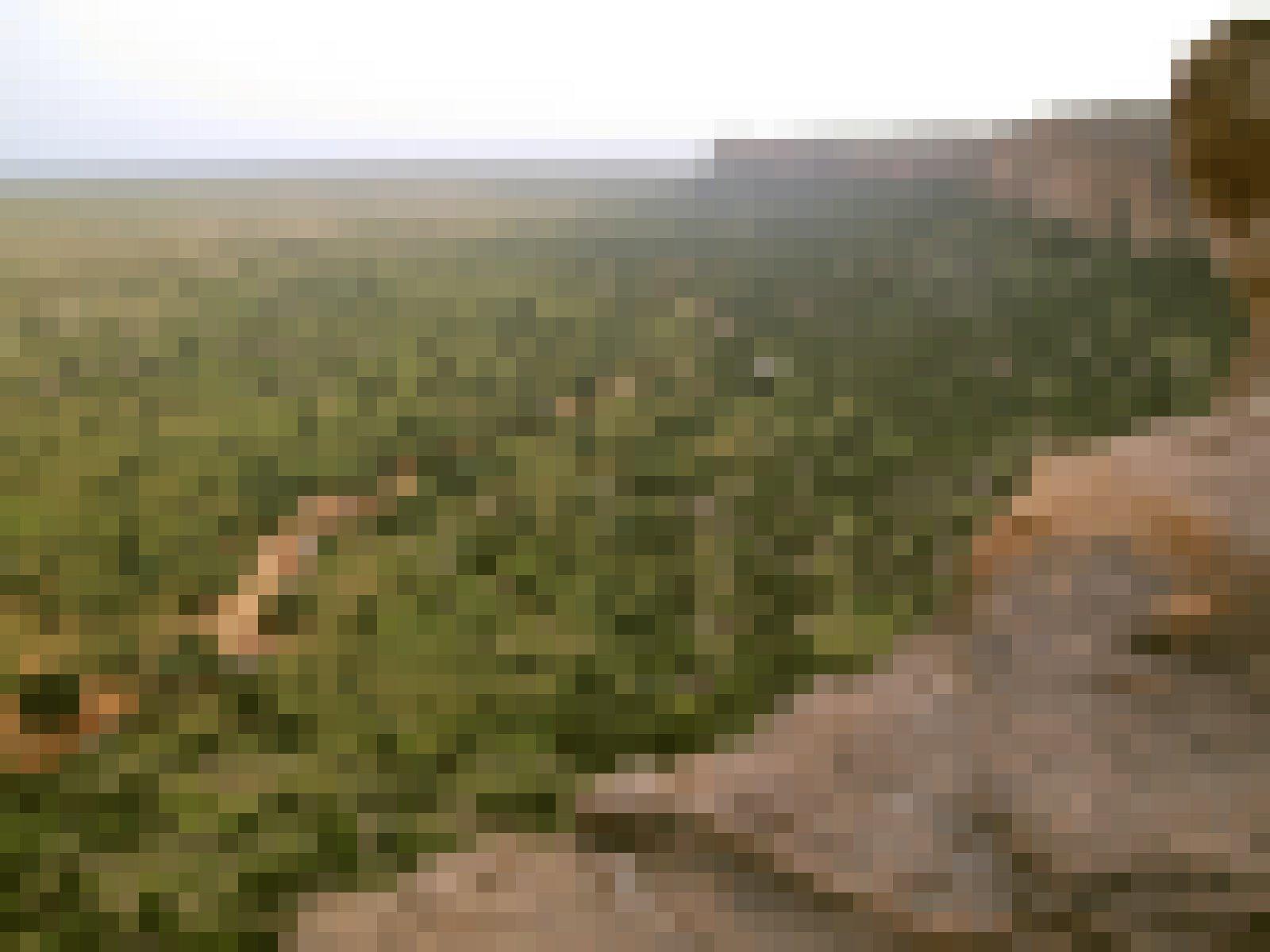 Das Foto wurde von einem bräunlichen Felsmassiv aus aufgenommen, vor dem links in der Tiefe eine Savannenlandschaft aus Gras und Bäumen liegt, durch die sich ein kleiner Fluss schlängelt. In einer solchen Landschaft lebten einst Vormenschen, die schon auf zwei Beinen liefen. Forscher glauben heute allerdings nicht, dass der aufrechte Gang sich in der offenen Landschaft entwickelt hat.