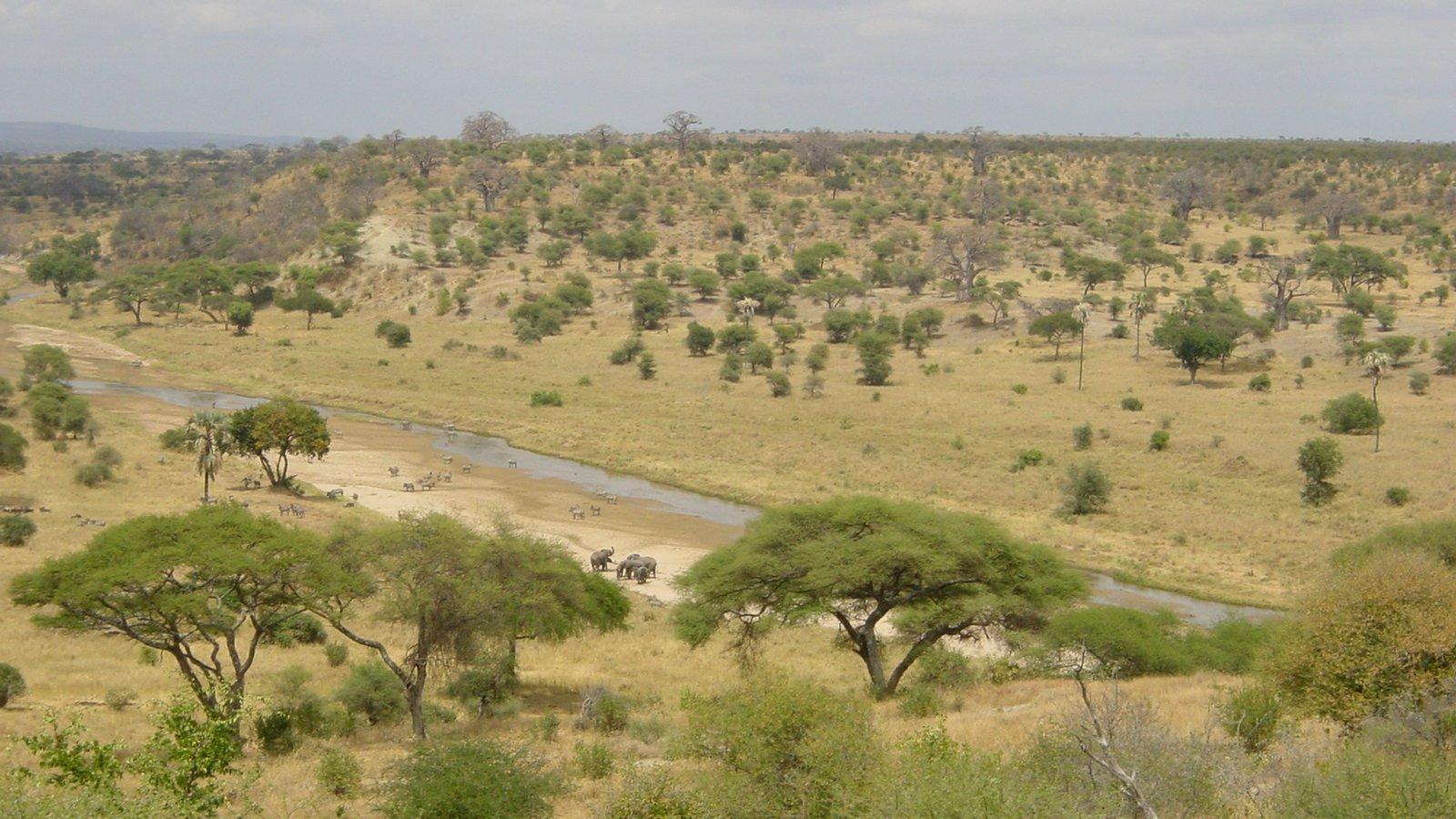 Die afrikanische Savanne ist eine Mischung aus offenem Grasland und vereinzelten Bäumen oder Baumgruppen. In einer ähnlichen Landschaft lebten einst die Nussknackermenschen
