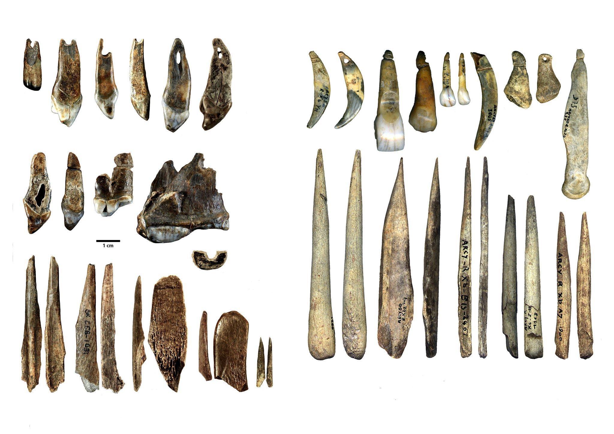 In der linken Bildhälfte sind in drei Reihen übereinander längliche Knochenwerkzeuge sowie kleine Schmuckgegenstände, etwa durchlochte Tierzähne, zu sehen. Sie stammen aus der Bacho-Kiro-Höhle, sind rund 45.000Jahre alt und wurden von modernen Menschen gefertigt. In der Grotte du Renne in Frankreich fanden sich ganz ähnliche Knochengeräte und Schmuckgegenstände, die auf der rechten Seite des Bildes in zwei Reihen übereinander zu sehen sind. Sie sind einige Jahrtausende jünger und dort lebten in jener Zeit Neandertaler. Die Forscher vermuten daher, dass die Neandertaler diese Kultur vom Homo sapiens übernommen haben.