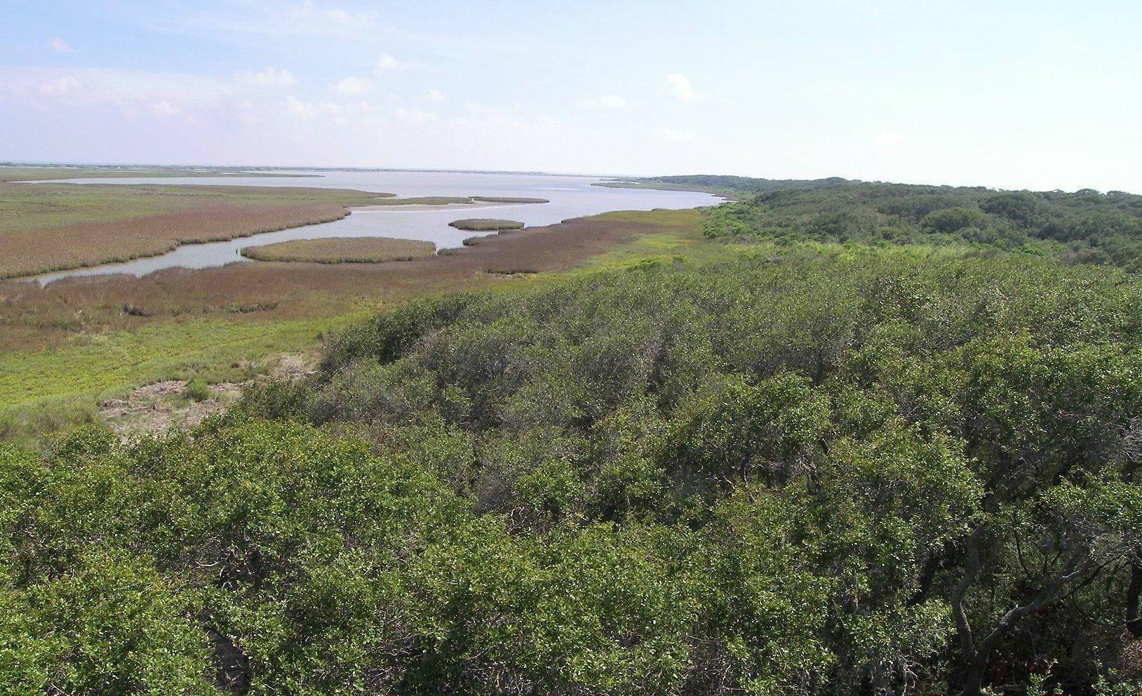Blick auf das Aransas National Wildlife Refuge im Süden des US-Bundesstaats Texas, im Vordergrund dichte Vegetation, weiter hinten das Feuchtgebiet mit offenen Wasserflächen hin zum Meer.