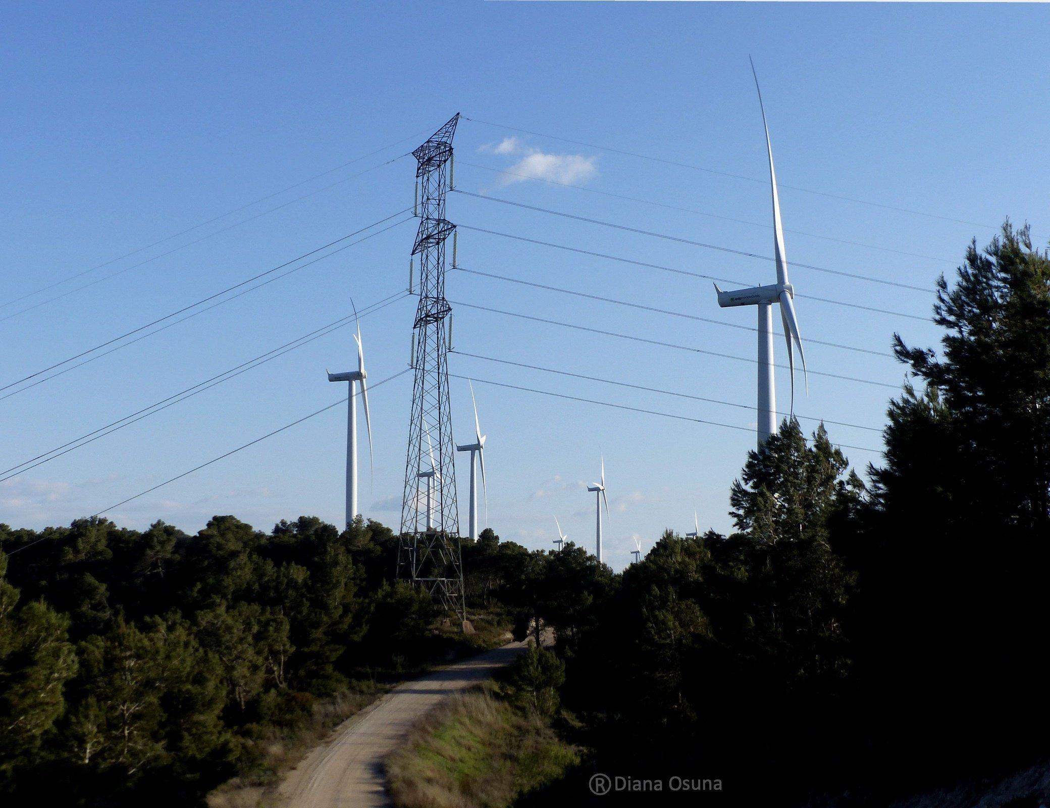 Windräder und ein Hochspannungsmast überragen einen Pinienwald