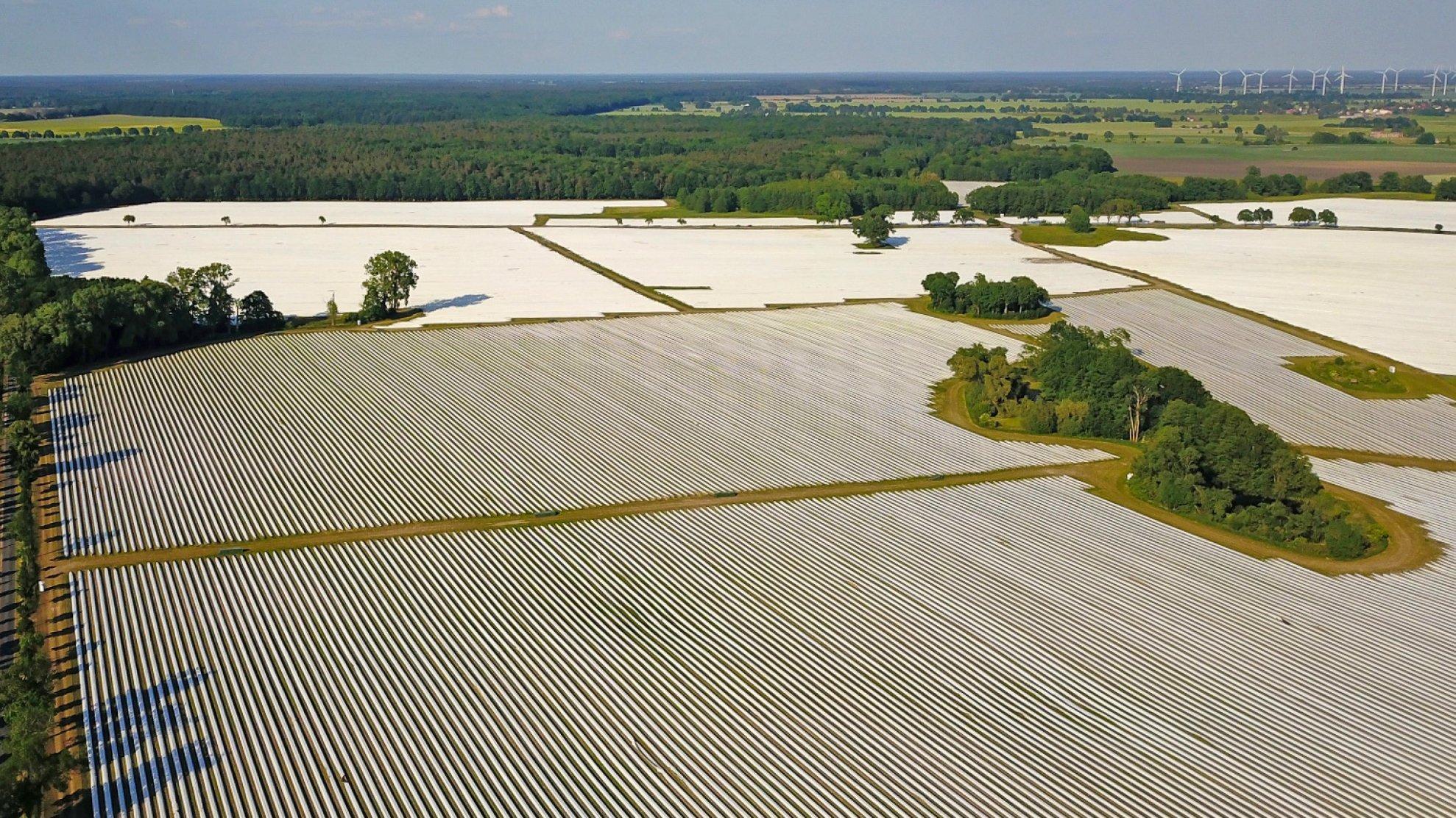 Luftaufnahme von Spargelfeldern, deren lange Erdwälle mit weißen Folienbahnen abgedeckt sind. Dazwischen einzelne Flecken mit Bäumen.