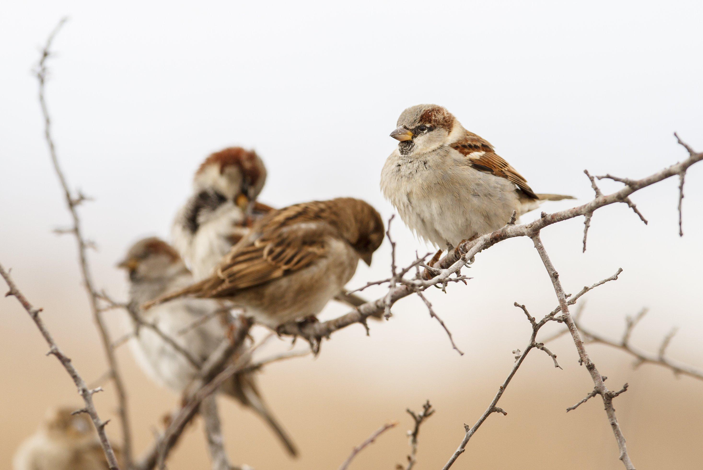 Die Spitzen sitzen zusammen auf einem Ast. Sie sind einfach sehr sozial, diese Tiere.