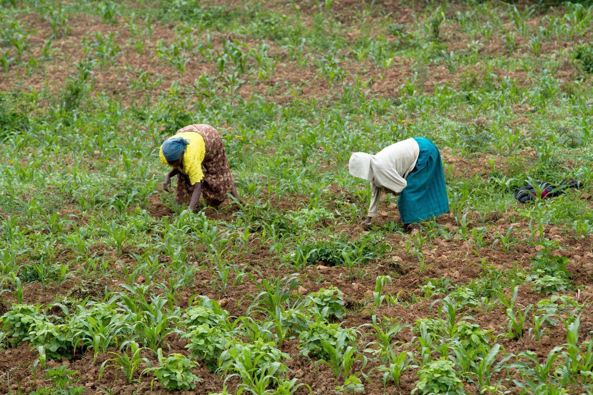 Zwei Landarbeiterinnen auf einem Feld.