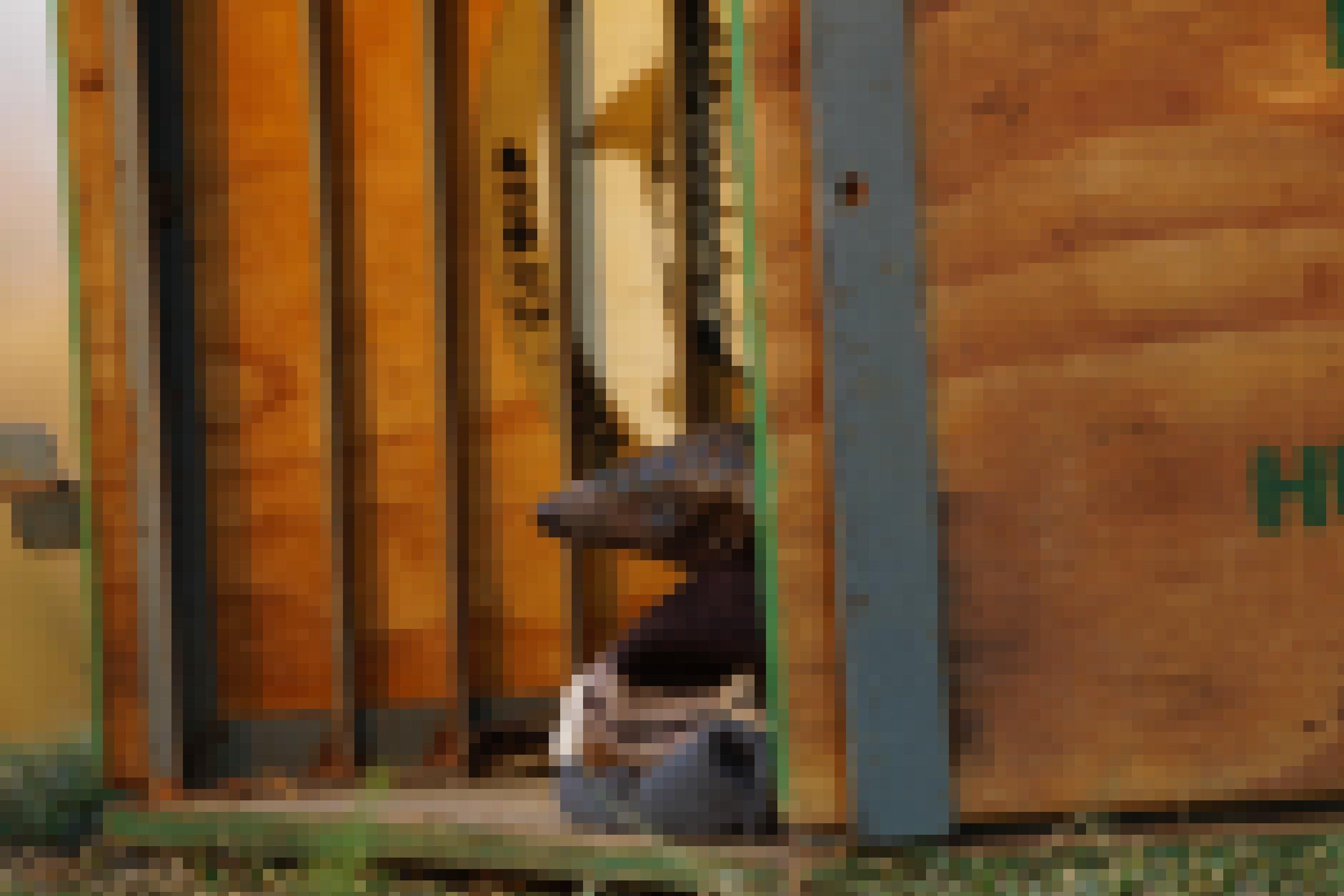 Pangolin Giya schaut aus seiner Holzkiste, zu sehen sind nur der Kopf, Nase und Augen
