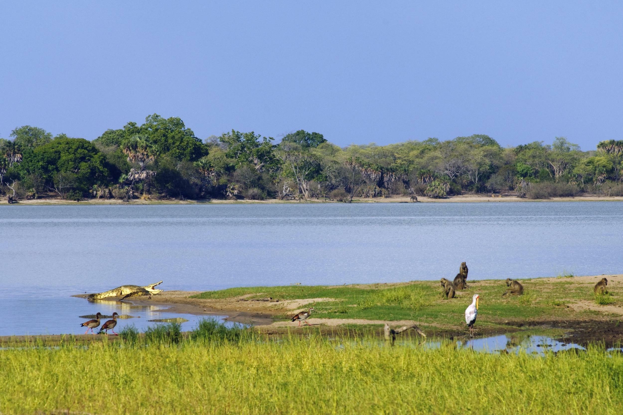 Im Hintergrund Bäume, am Fluss ein Krokodil, Affen und verschiedene Wasservögel.