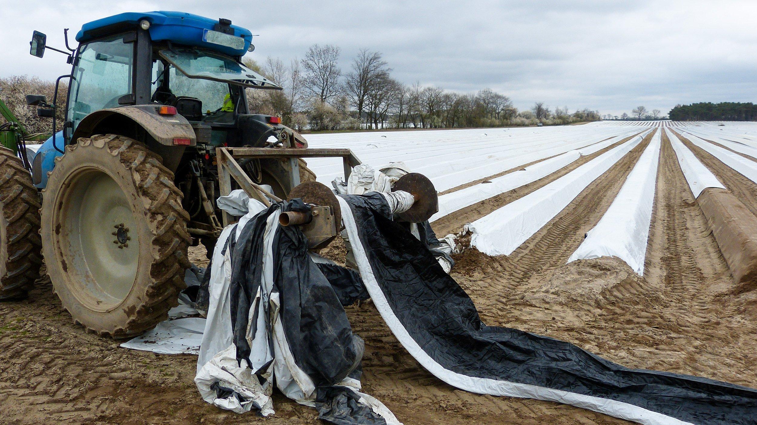 Ein Traktor steht vor einem Feld mit Erdwällen für den Spargelanbau, die mit langen Bahnen weißer Folie abgedeckt sind.