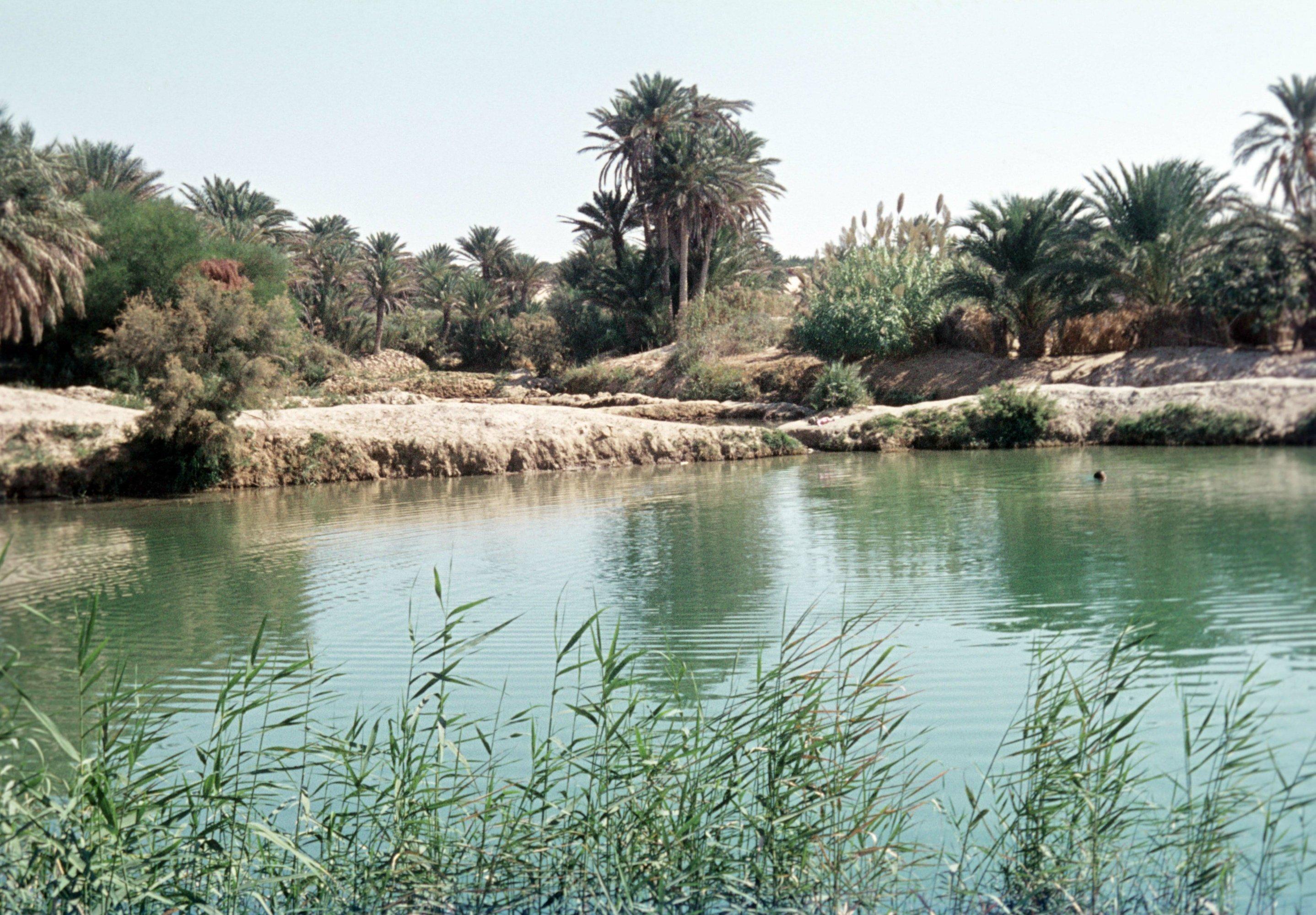 Historisches Foto der Oase von Kebili. Die Wasserquelle bildet einen kleinen See, im Hintergrund sind Palmen zu sehen.