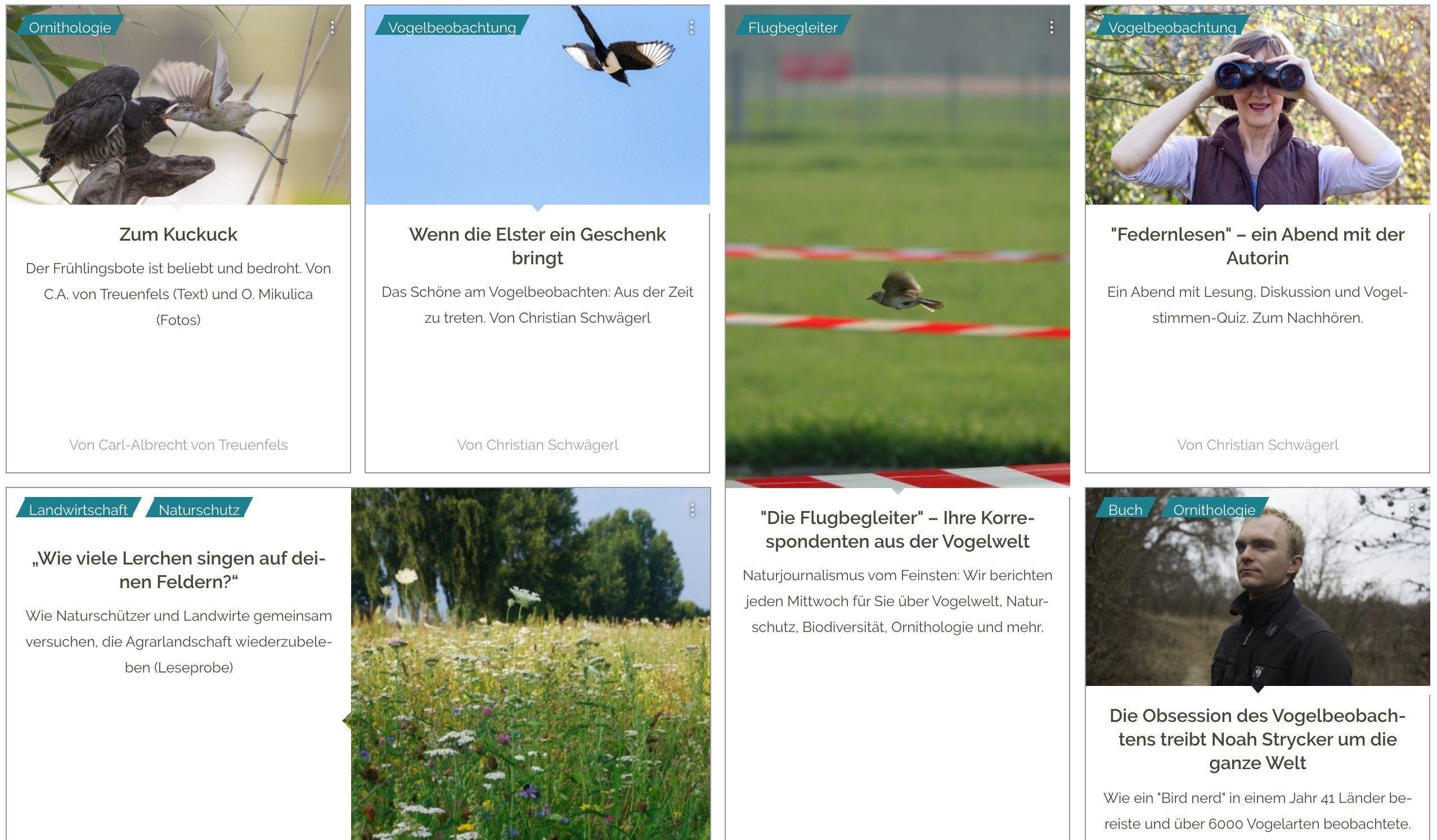 Screenshot von diversen Artikel der Flugbegleiter.