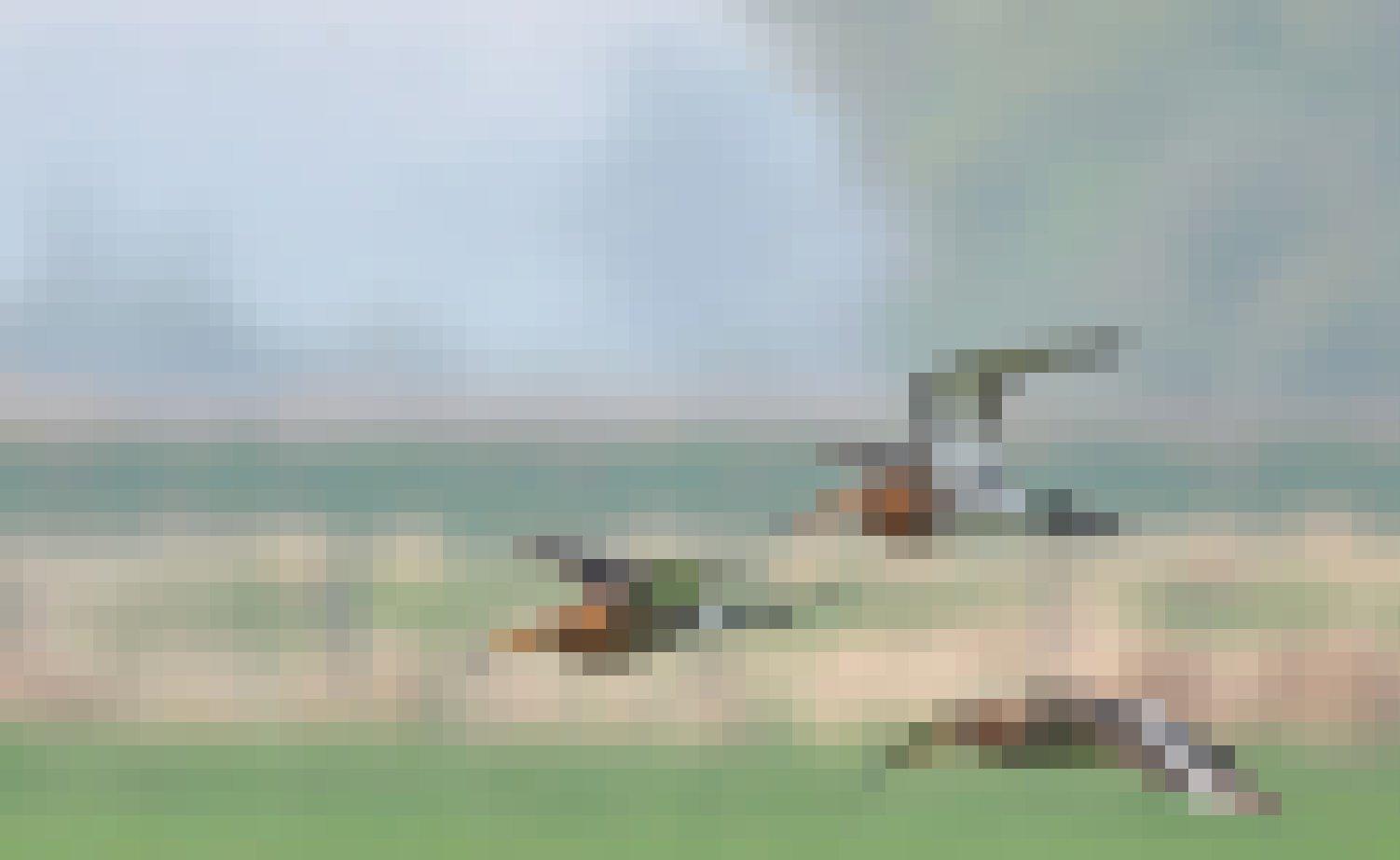 Drei Uferschnepfen fliegen über ein Moor.