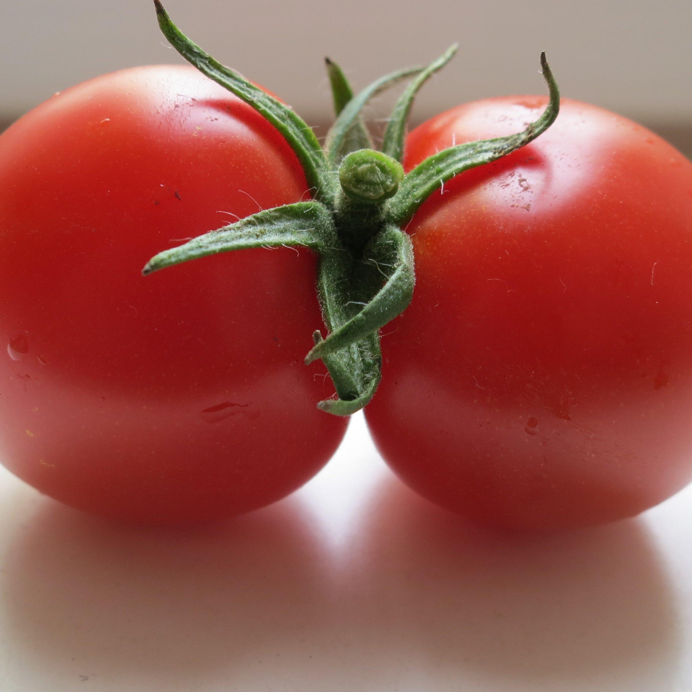 Eine rote Tomate, die aus zwei zusammengewachsenen Früchten besteht.
