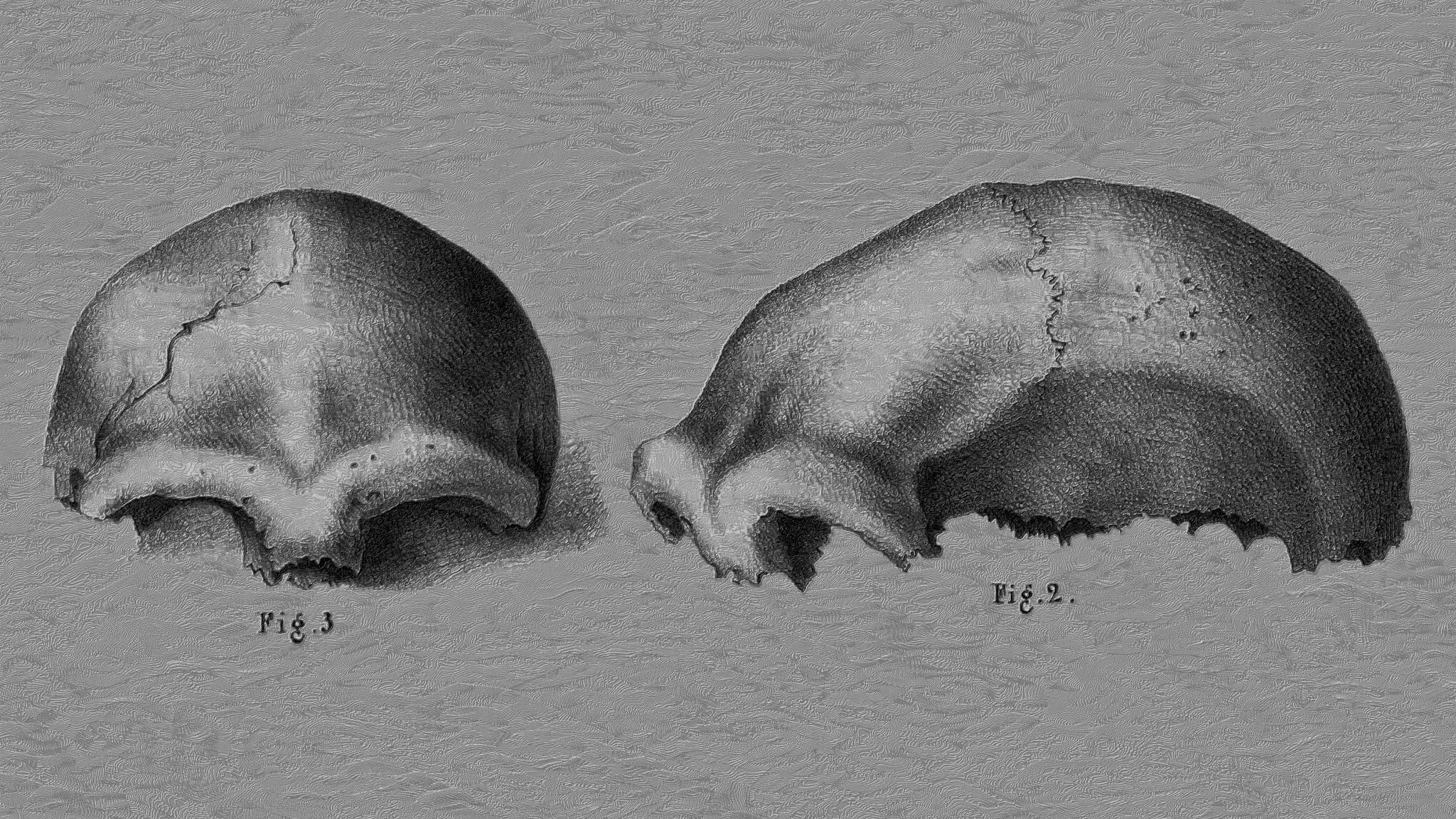 """Zu sehen ist die Zeichnung vom Schädeldach des """"Ur""""-Neandertalers aus der Feldhofer Grotte, den Arbeiter im Jahr 1856in einem Steinbruch bei Düsseldorf freilegten. Die filigrane schwarzweiße Illustration zeigt das Schädeldach mit den mächtigen Überaugenwülsten ein Mal von der Seite und ein Mal von vorne."""