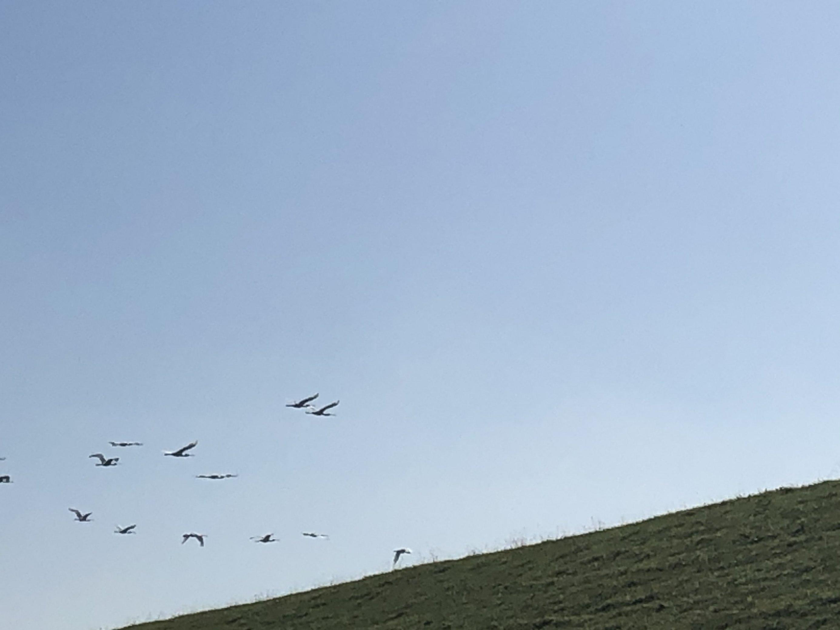 Das Bild ist ein Schnappschuss mit verschwommen sichtbaren Löfflern, die über den Deich des Jadebusens fliegen.