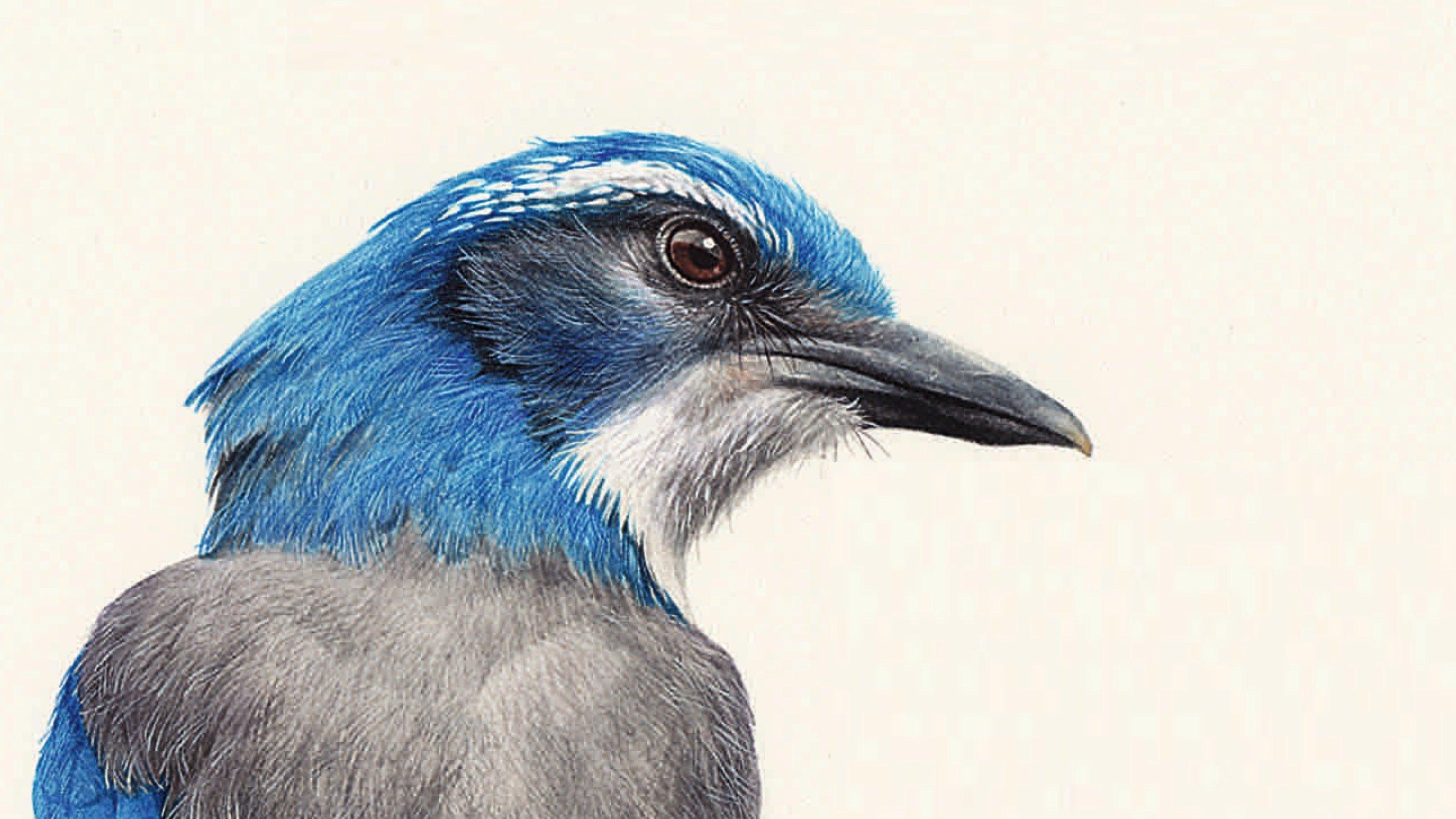 Zu sehen ist das Cover des Buchs, das einen blauköpfigen Vogel darstellt.