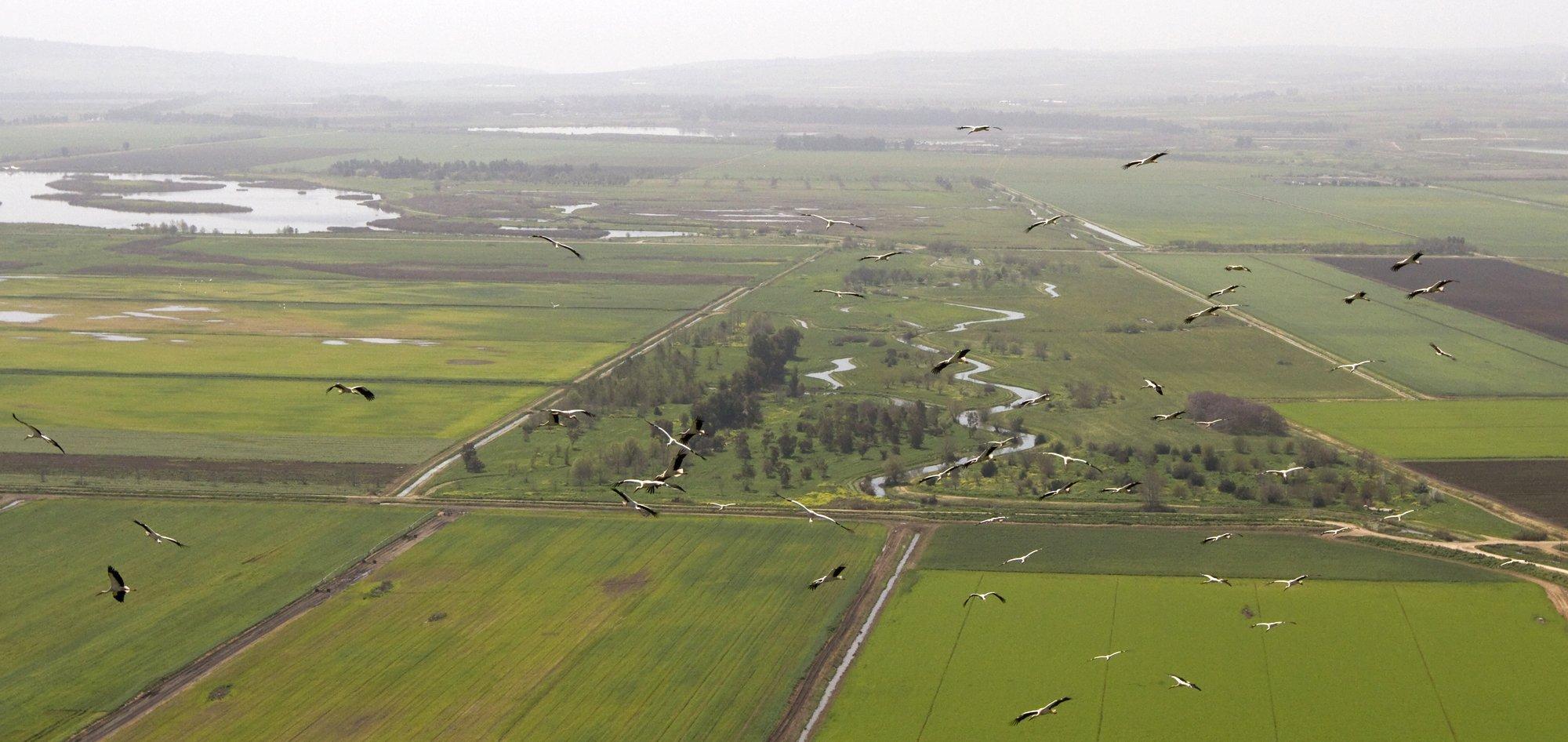 Ein Luftbild von Störchen, die über die Landschaft Galiläas in Israel fliegen