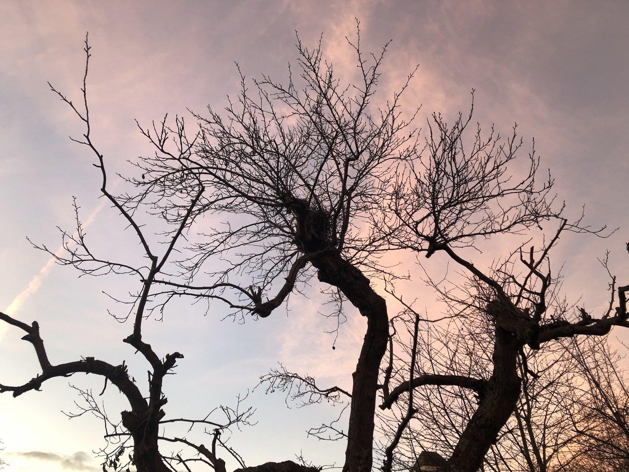 Das Bild zeigt drei laubfreie Bäume, die sehr chaotisch in den Himmel wachsen und dabei eine leicht gespenstische Anmutung haben.