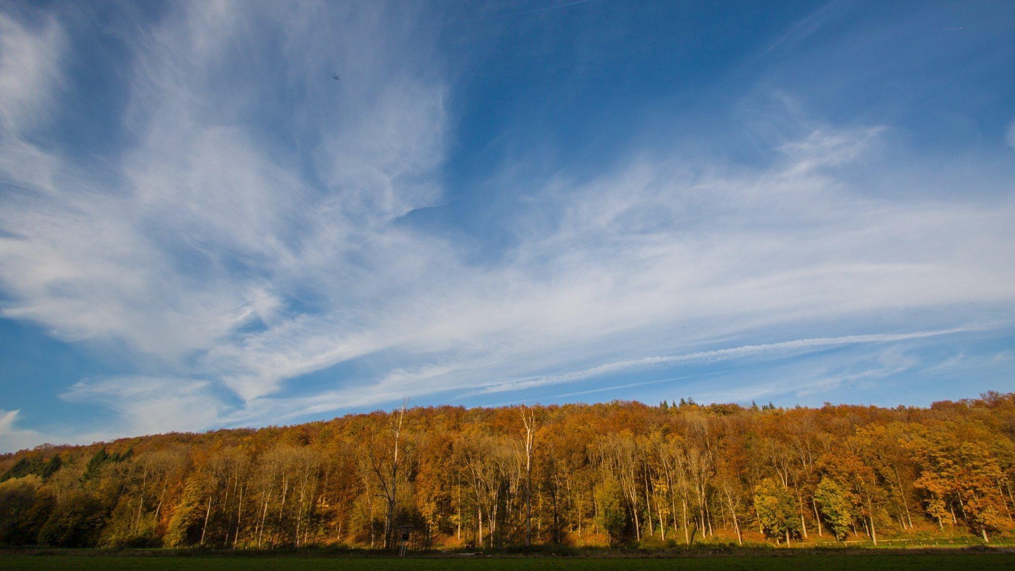 Blick auf ein Waldgebiet auf der Schwäbischen Alb. Im Vordergrund sind Wiesen zu sehen..