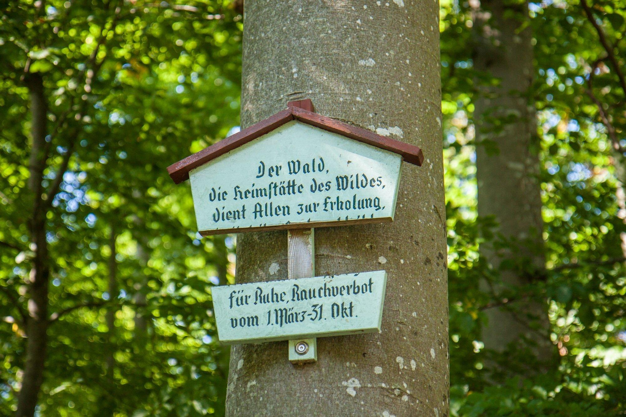 Schild an einer Buche. Es weißt auf das Ruhegebot im Wald hin.